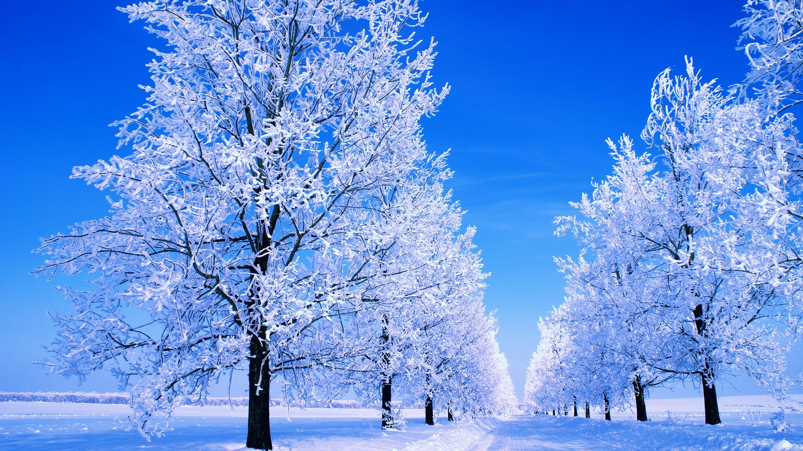 Картинки с зимой, поздравительная открытка
