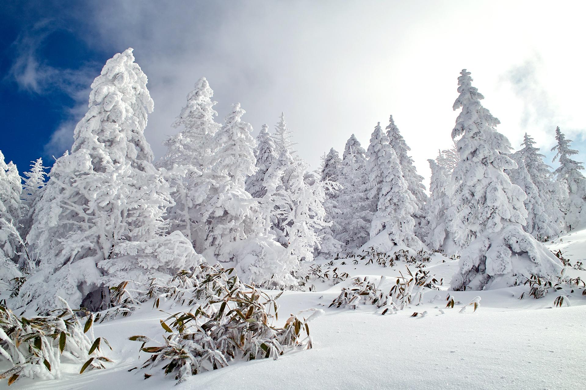создать эксклюзивные фото зимнего леса в высоком качестве анимационные