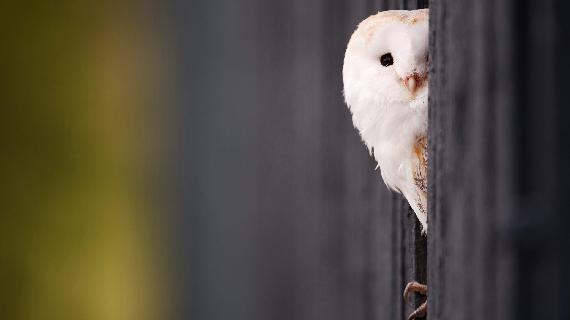 Cute winter owl wallpaper