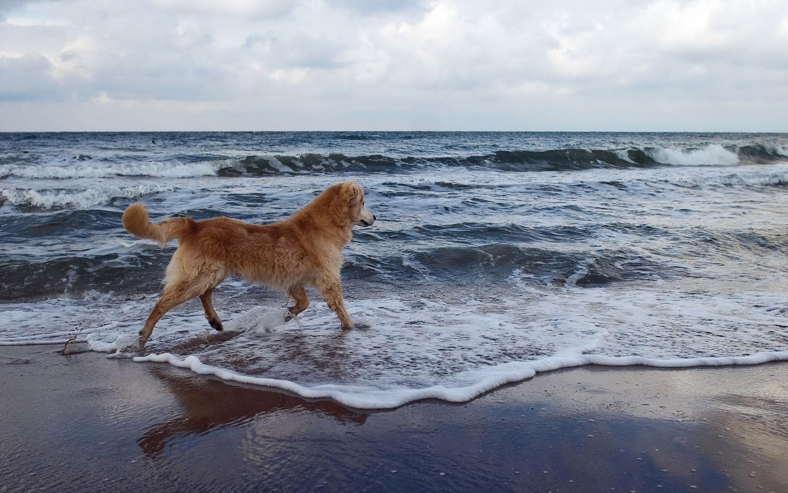 фото собака у моря