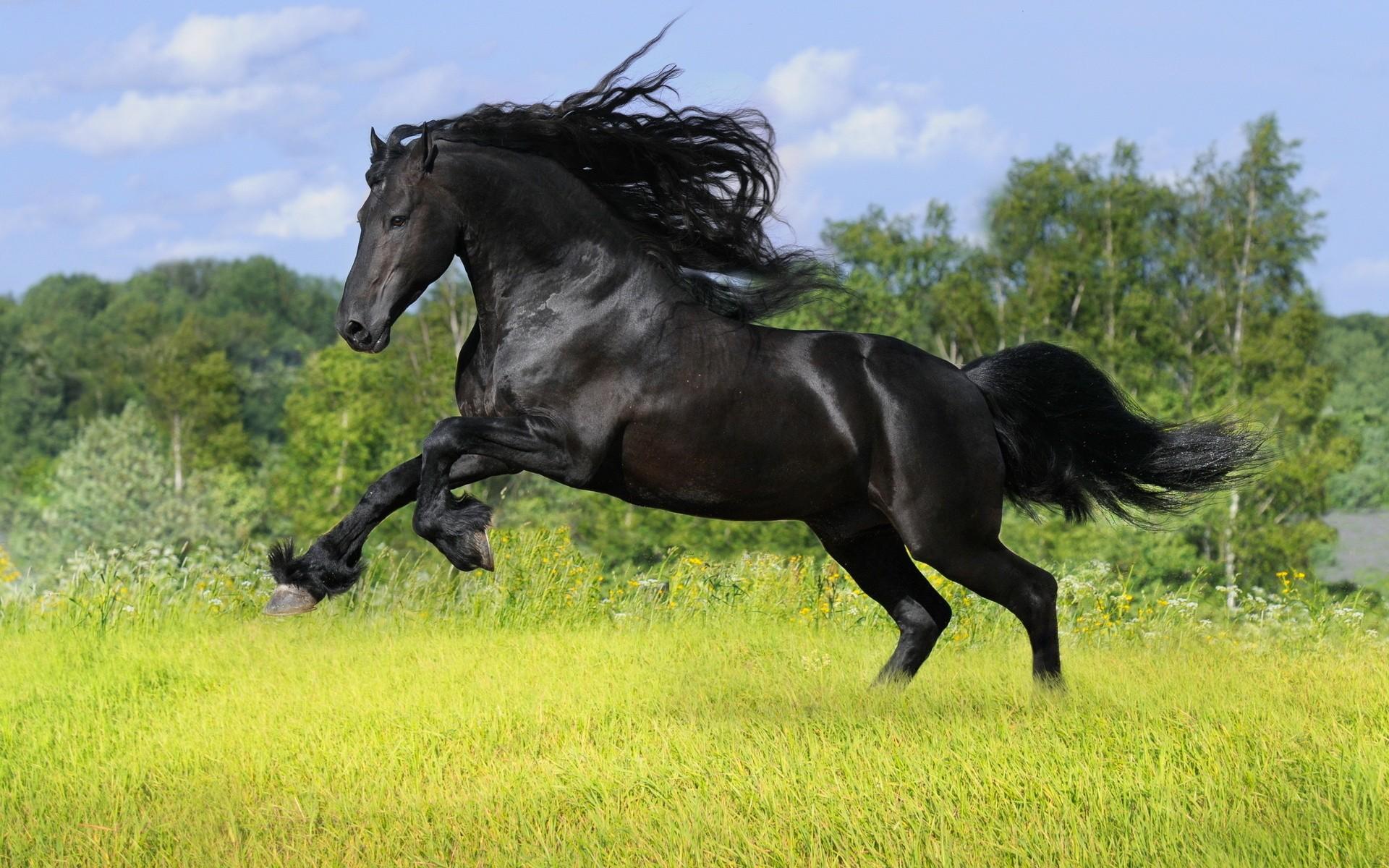Ver fotos de caballos de mar 27