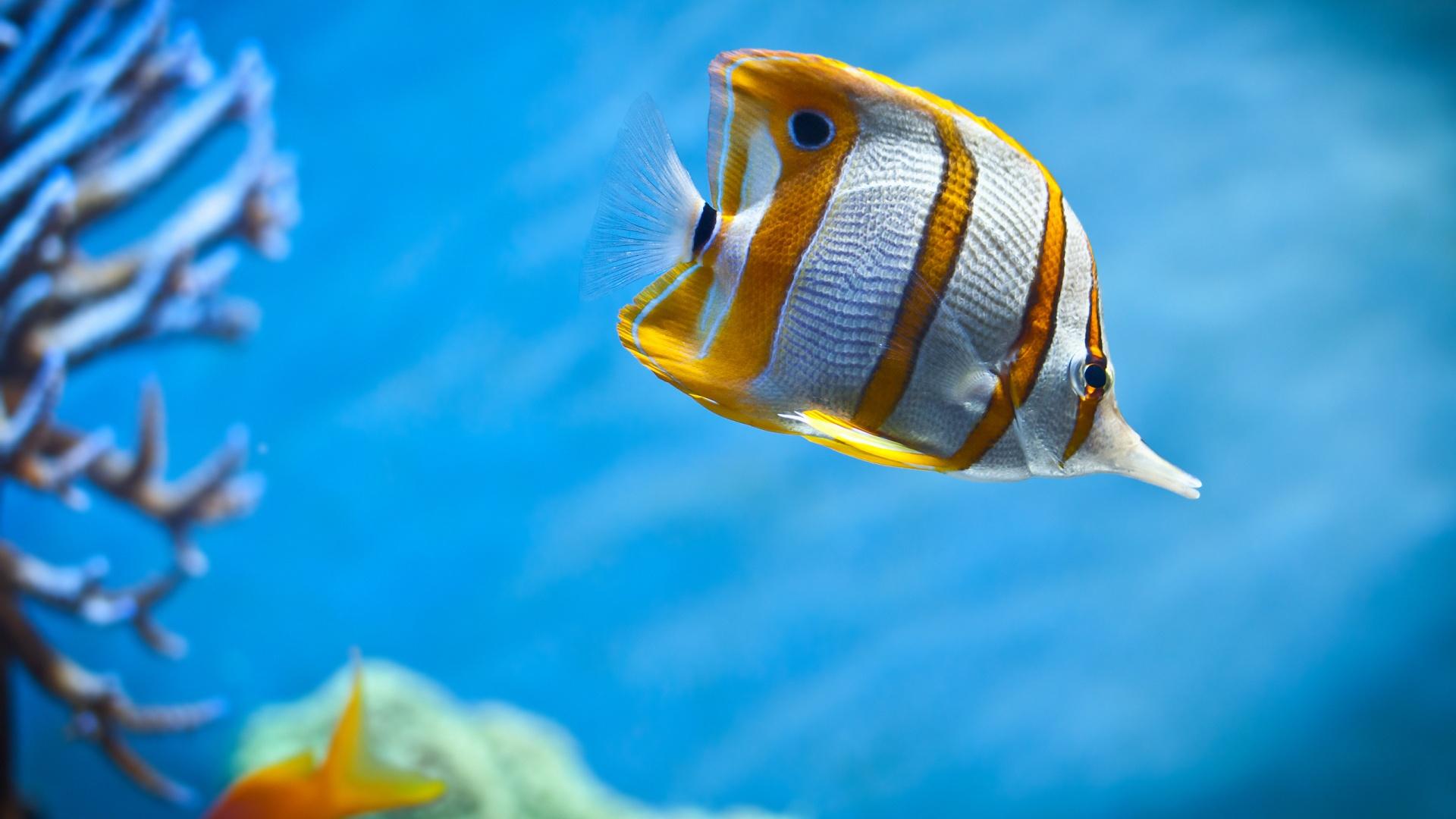 Juegos de tomar fotos a peces gratis 41