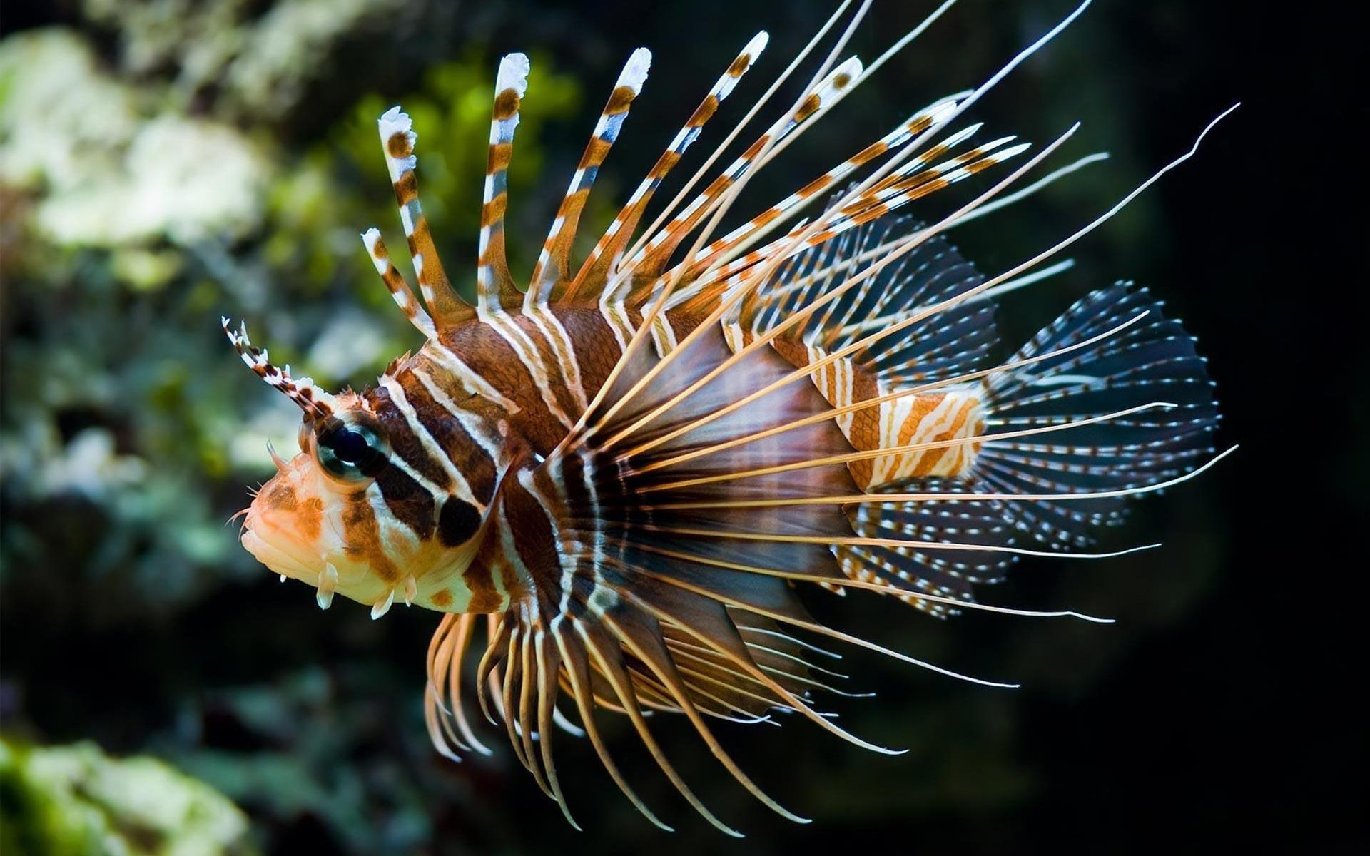 coral fish - 1920x1200  Fish