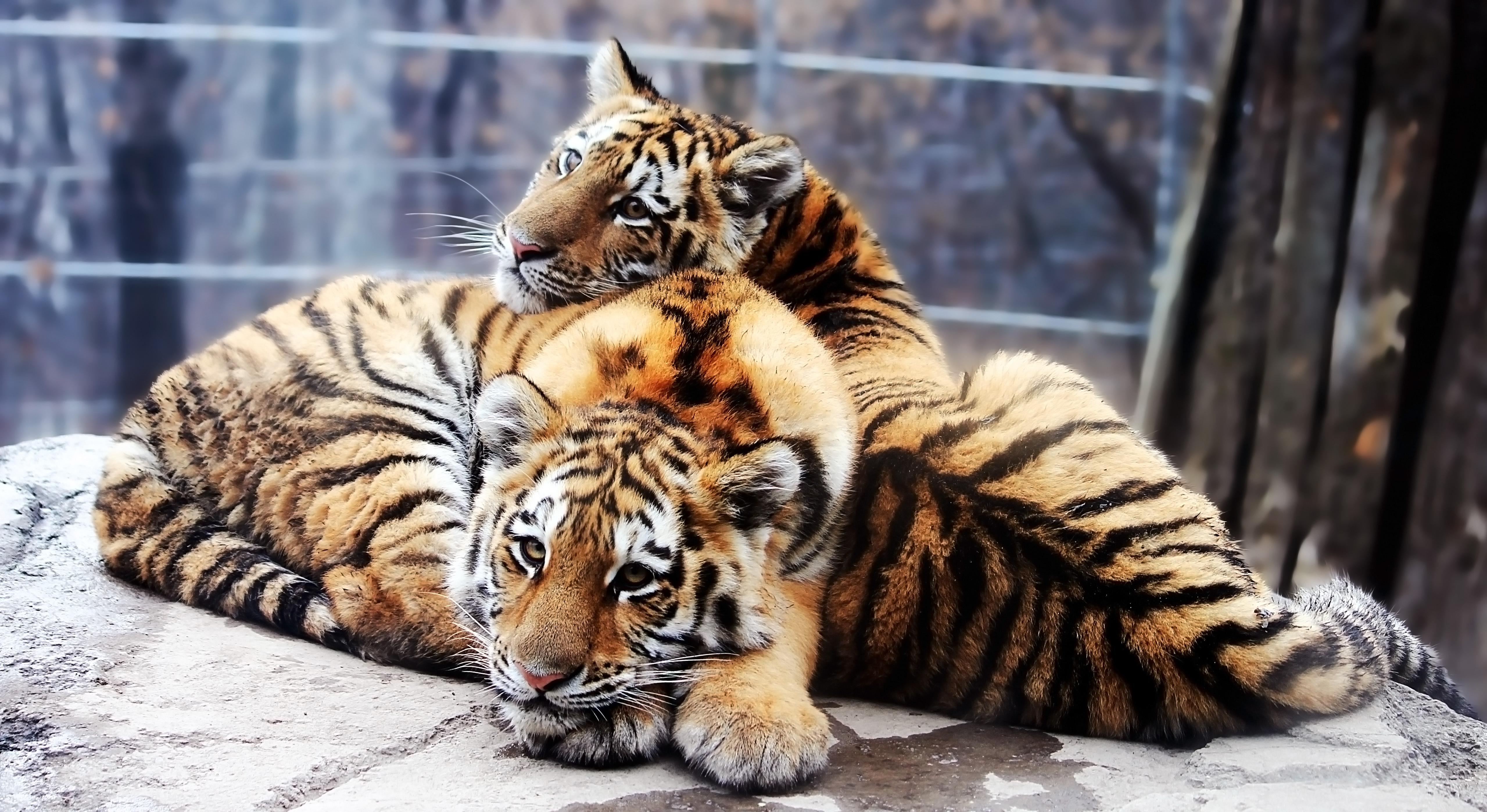 Животные Обои На Телефон HD