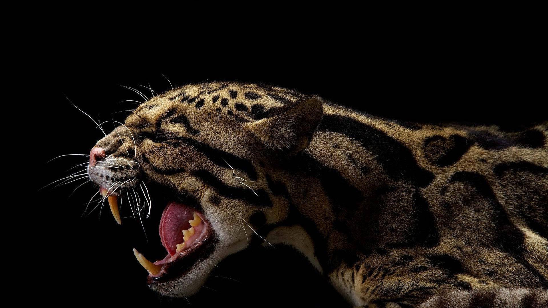 Фото животных оскал