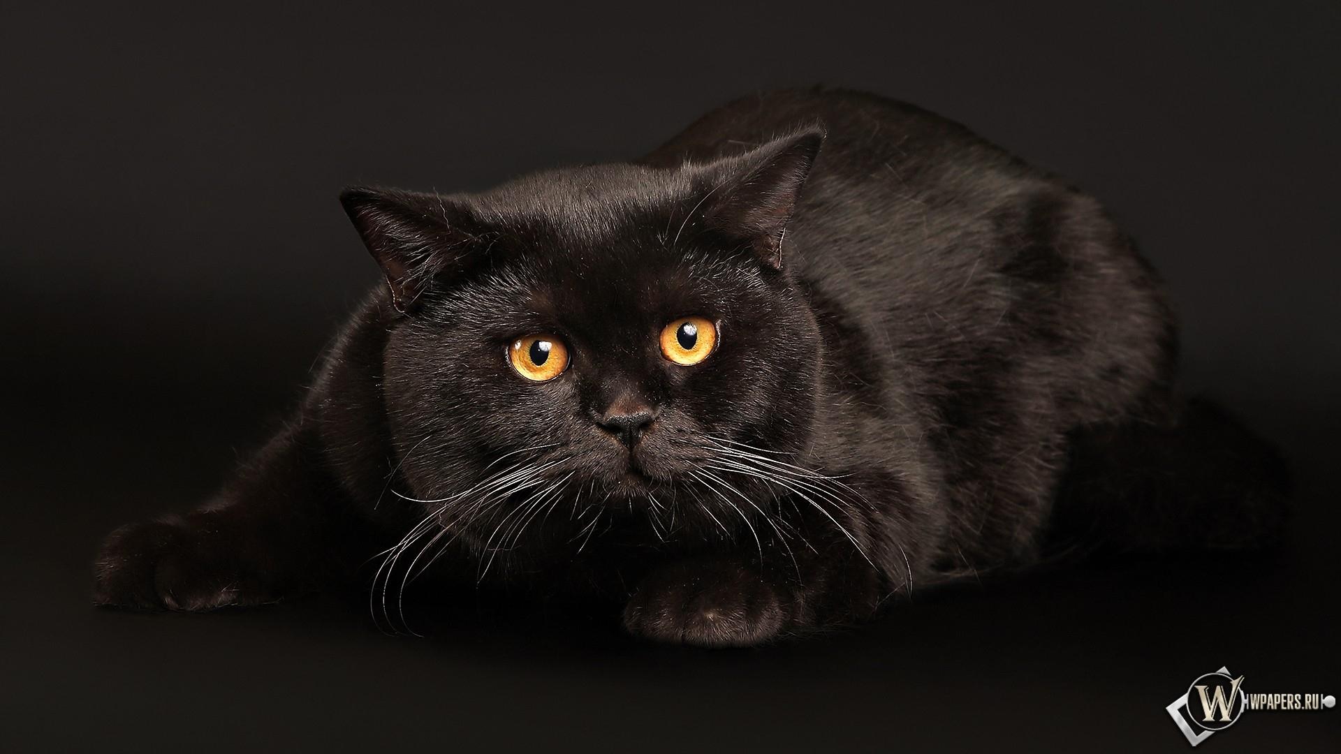 Черные и толстые 3 фотография