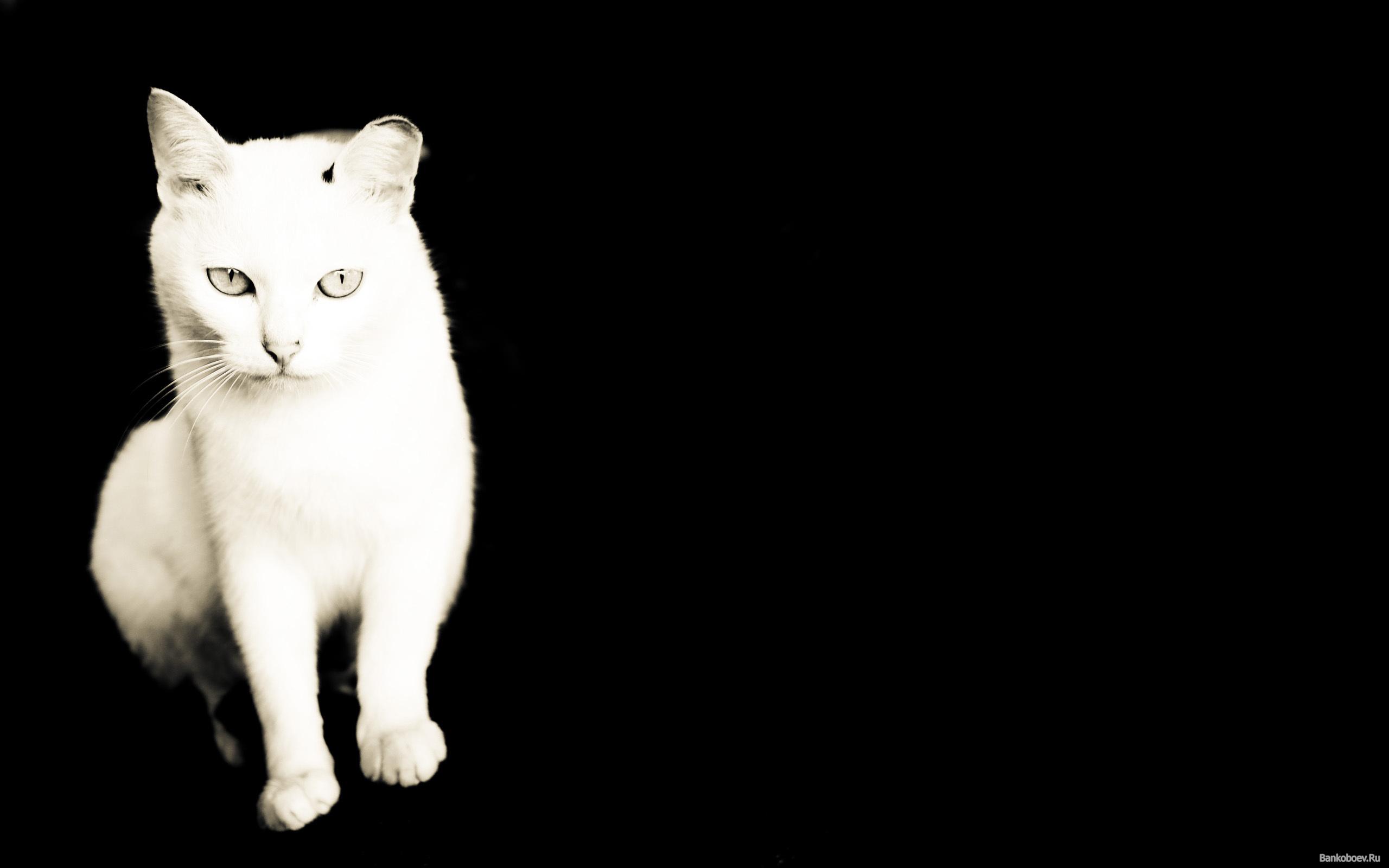 Black Cat White Cat Eng