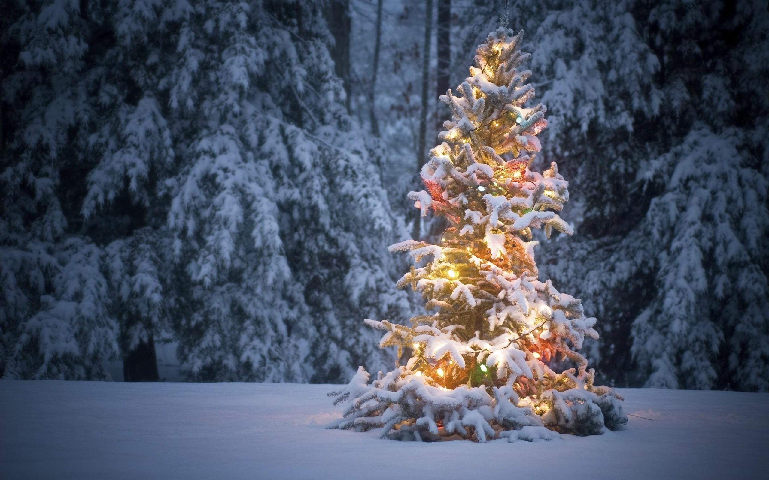 фото елки в зимнем лесу открытки неужели хочется