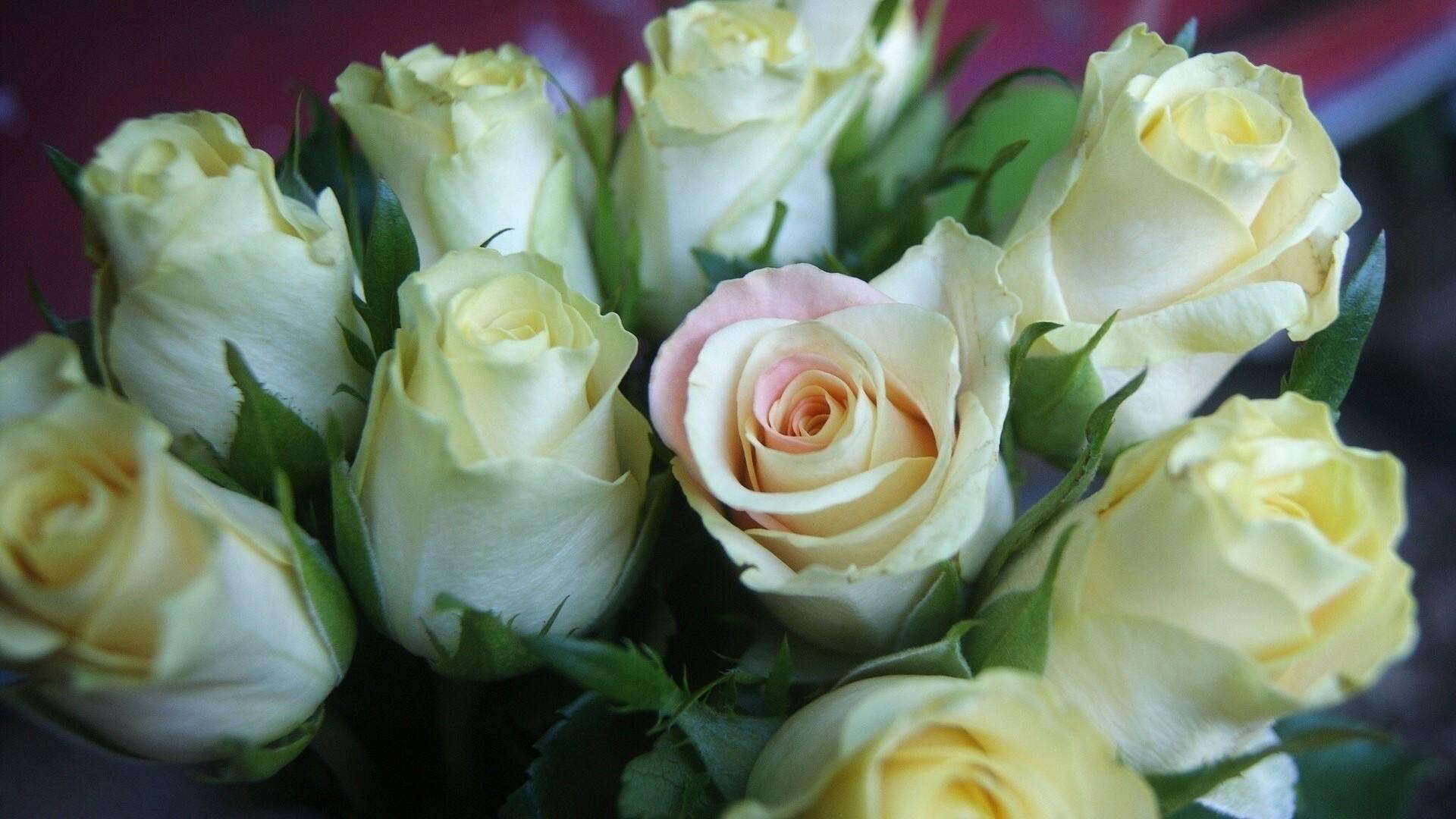 Открытка с красивыми белыми розами
