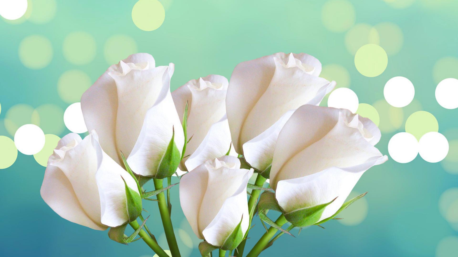 Открытки дню, открытки для фона на 8 марта с розой