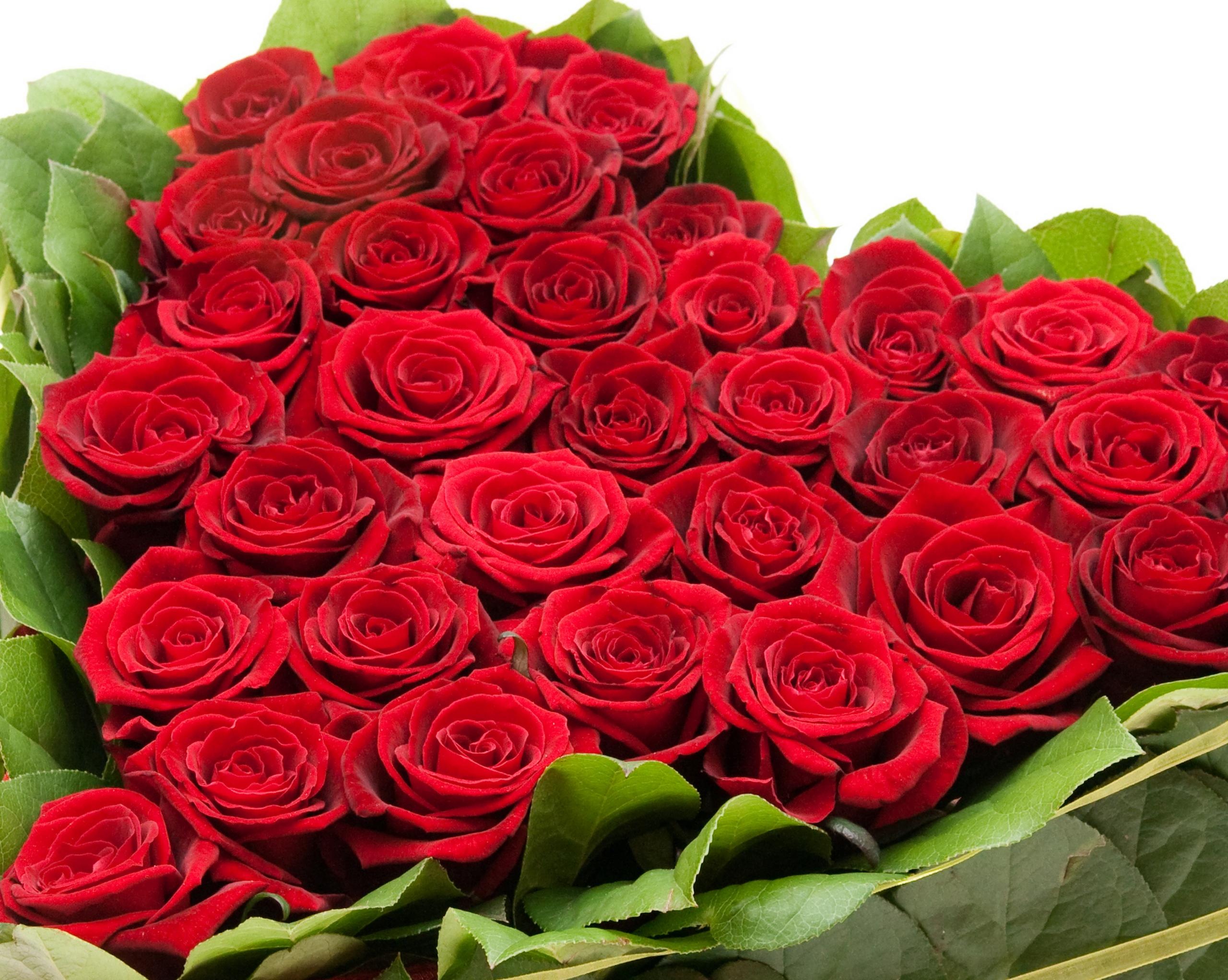 Картинки цветов для красивой девушки