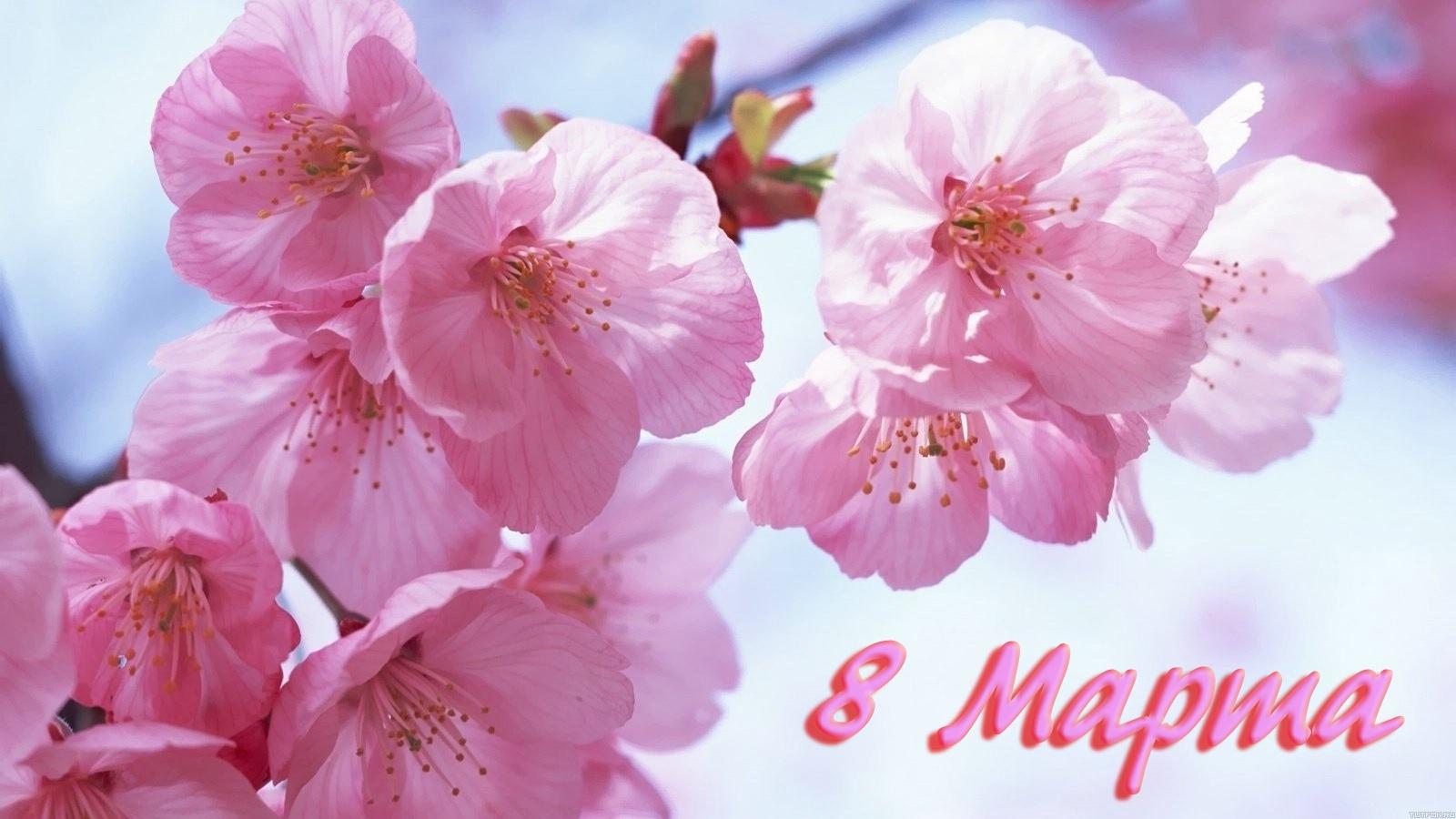 С 8 марта картинки нежные цветы, открытки