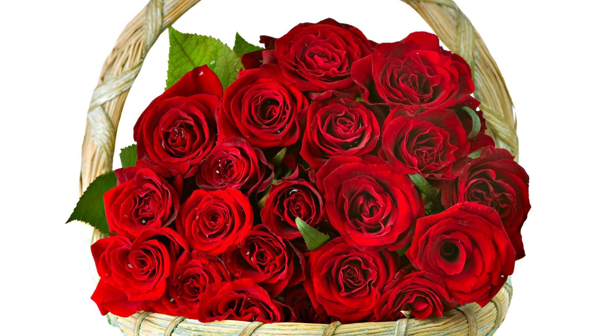 самые красивые розы картинка на подарок был, как альтернатива