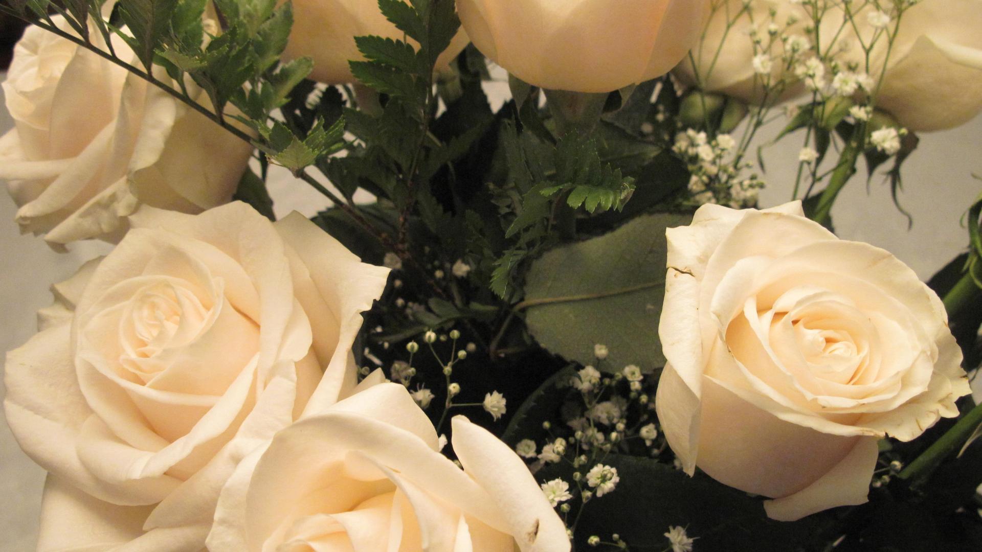Картинки масленица, картинка белые розы на рабочий стол