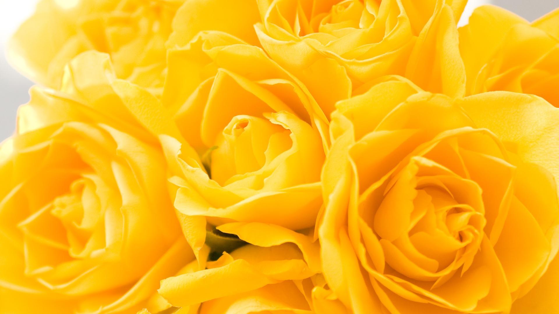 Февраля, картинки красивые желтые цветы