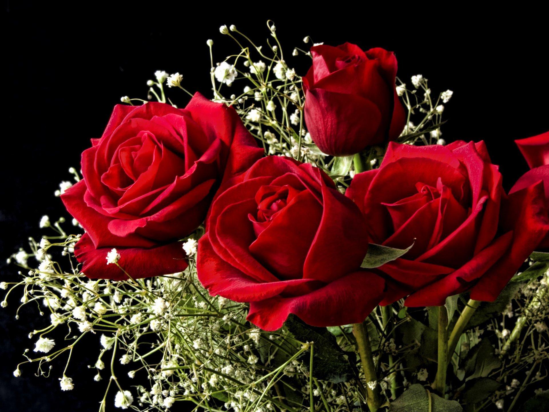 Лучшие открытки роз красных