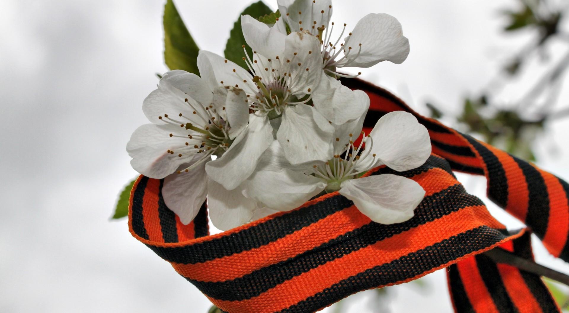 Одноклассниках, открытка цветы на 9 мая