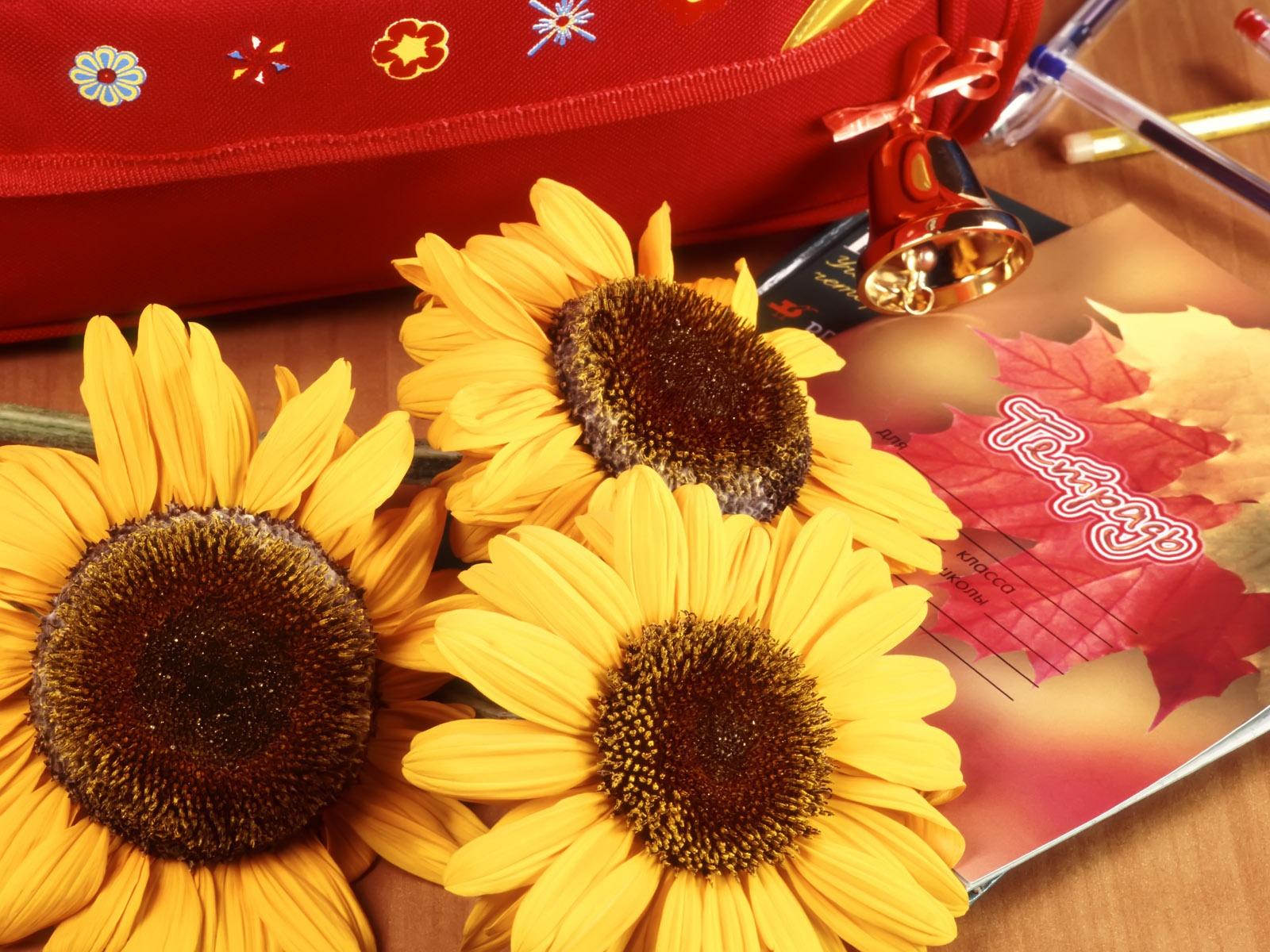 Школьная картинка с цветами, картинки массажист смешные