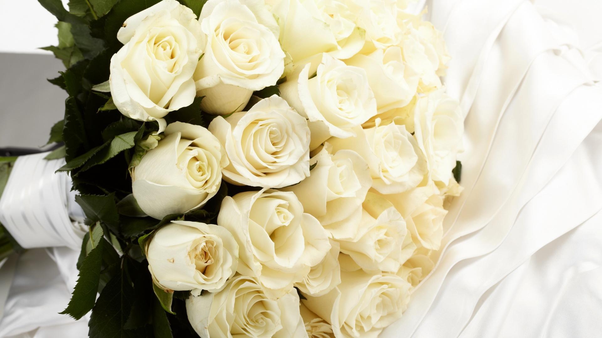 Белый роза цветы