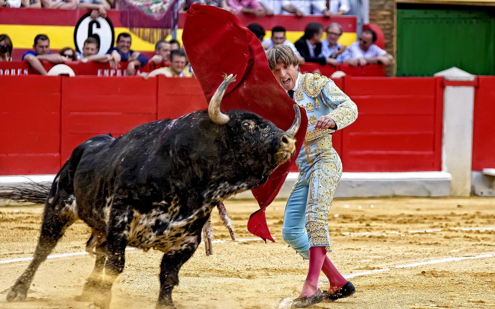Смешные картинки испания