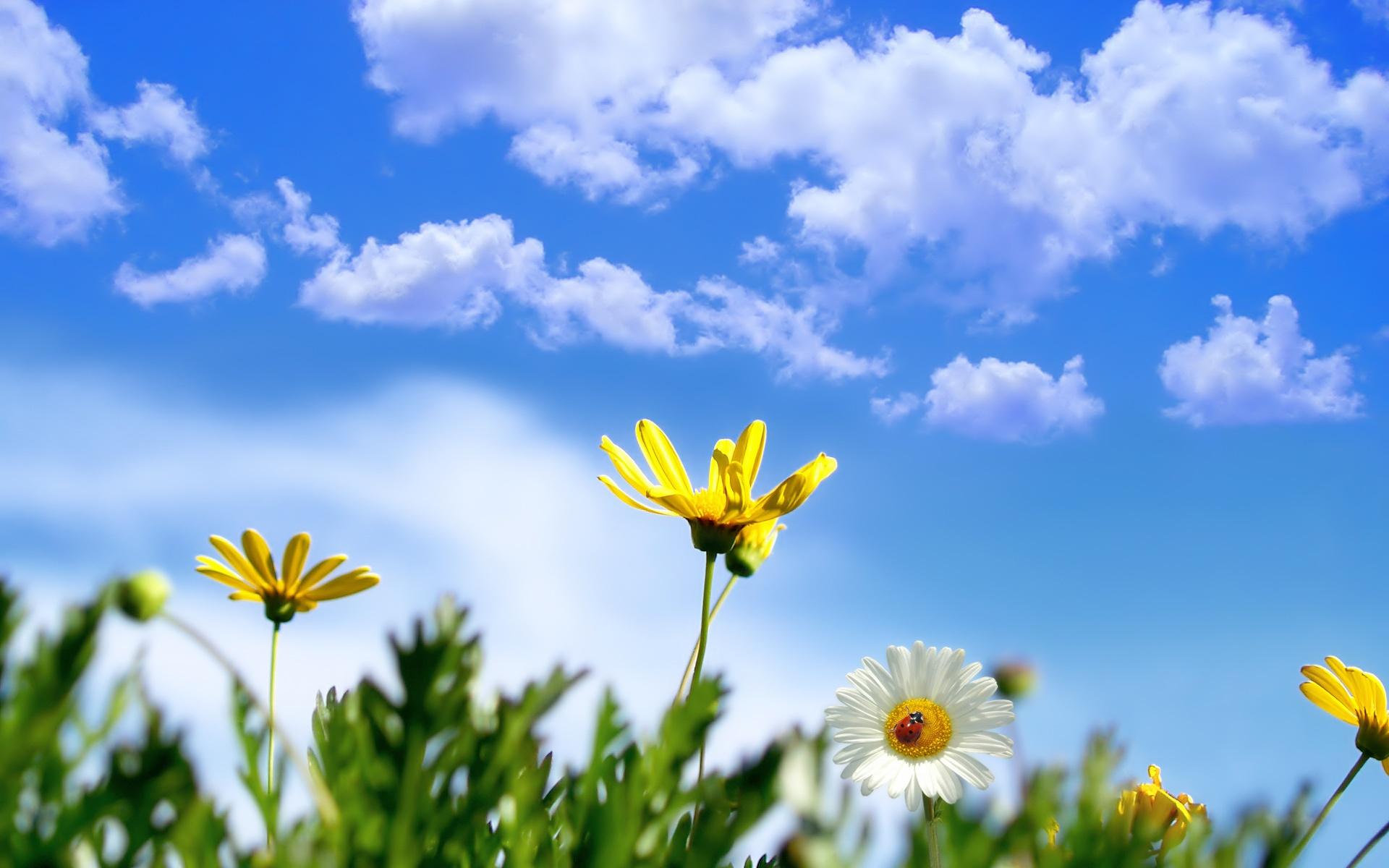 Открытка небо и солнце, лес открытки картинки