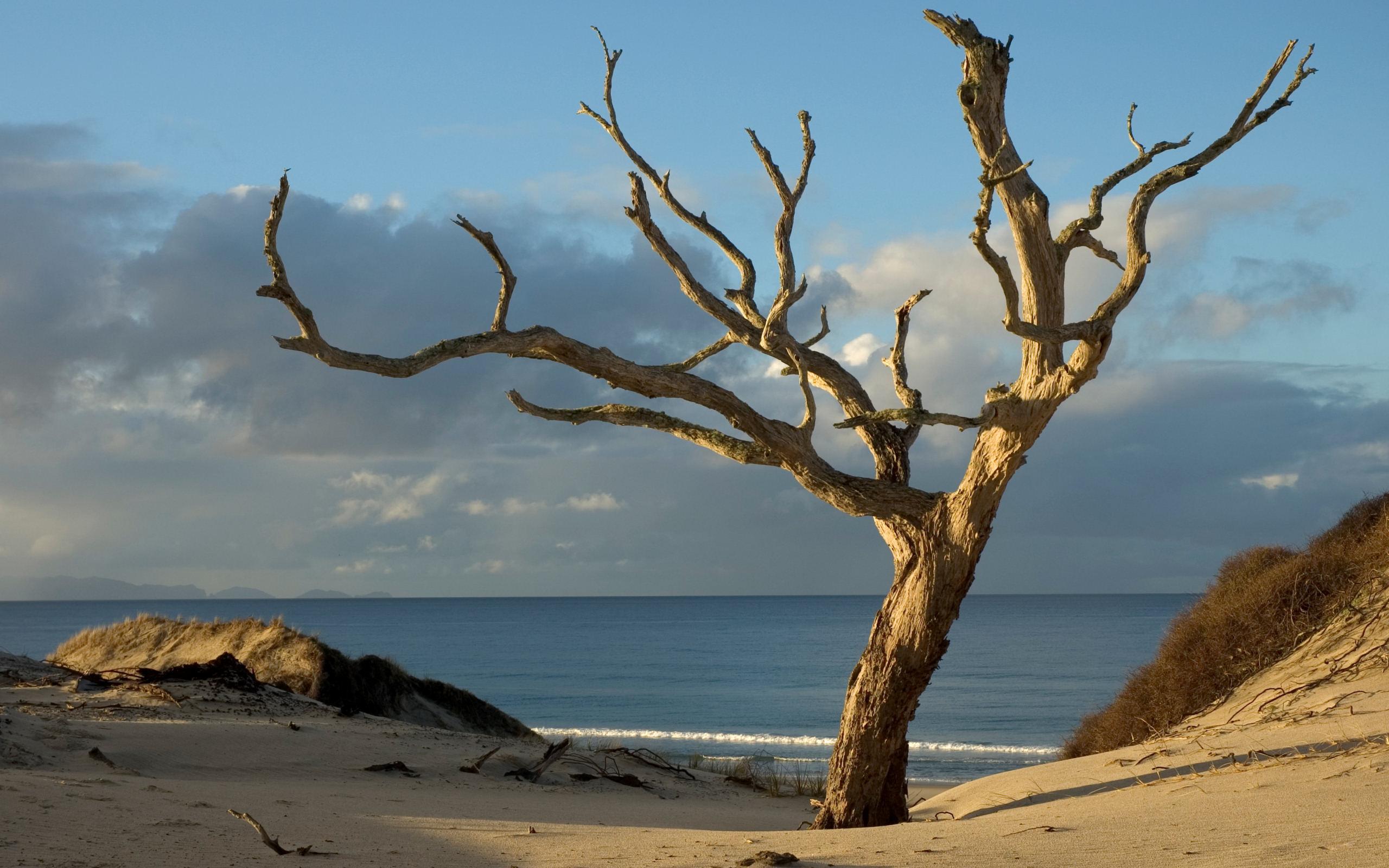 sea wallpaper nature dead - photo #35