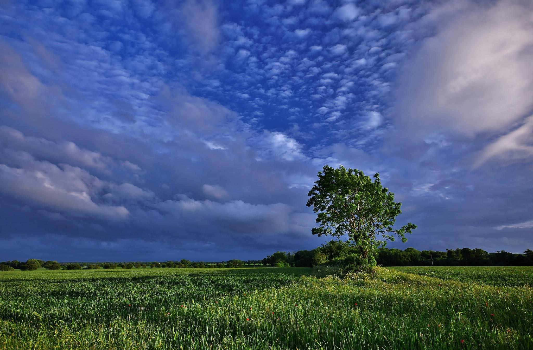 это картинки голубое небо природа всех сторон