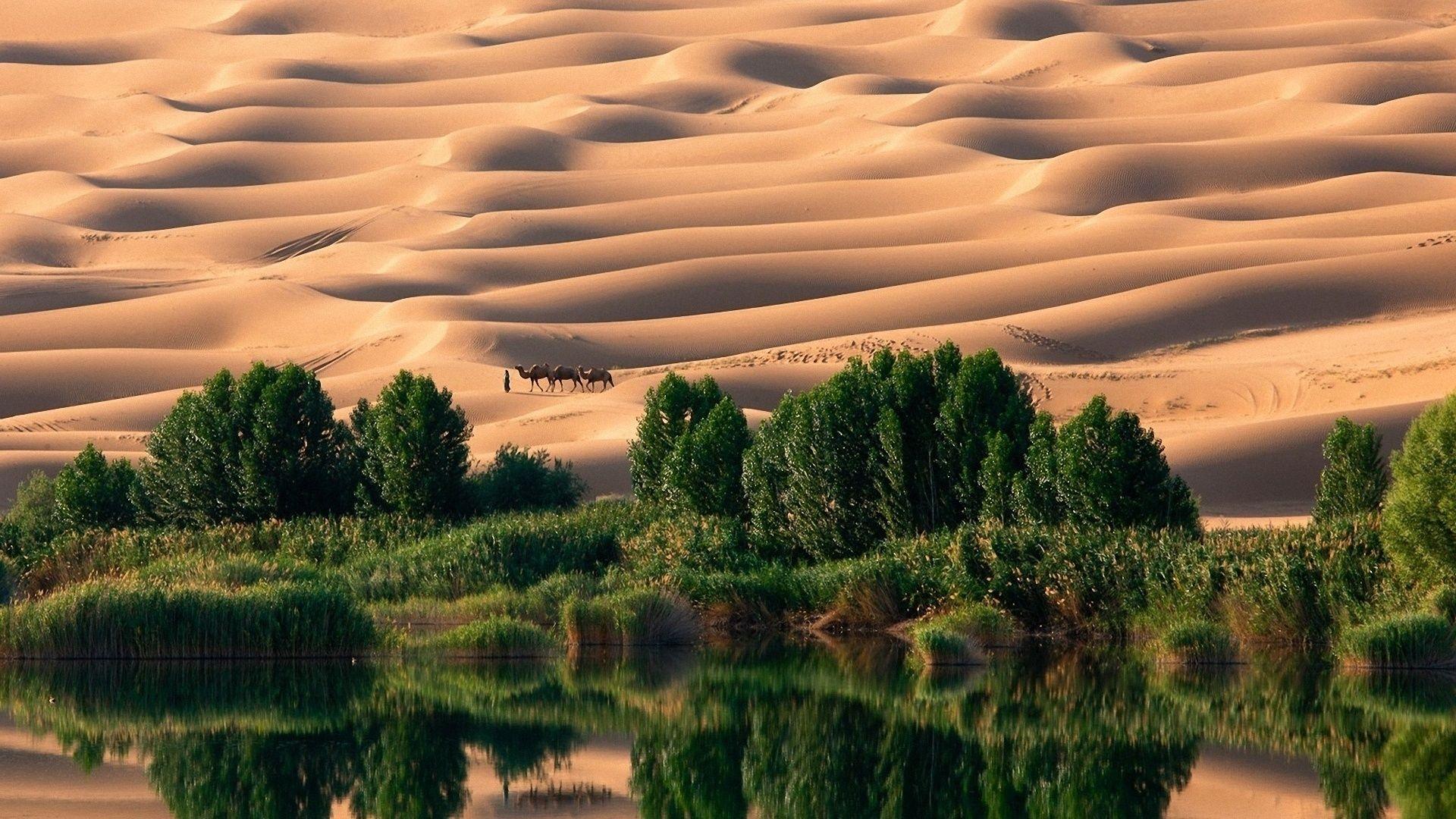 http://www.zastavki.com/pictures/originals/2014/Nature___Desert_Oasis_in_the_desert_089469_.jpg