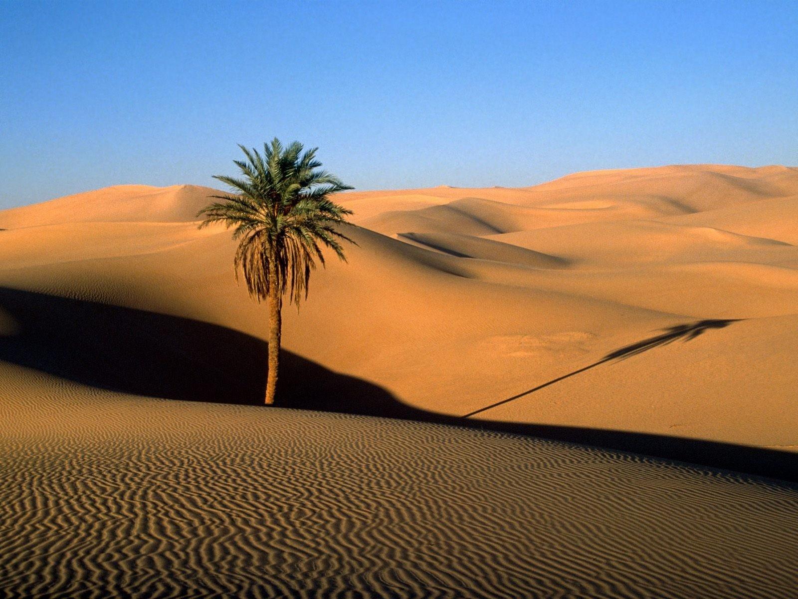 Рослини в пустелі фото 12 фотография