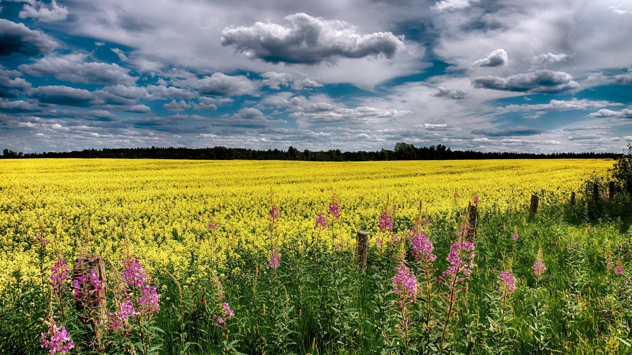 картинка природа украины летом онкологии реконструктивно-пластической