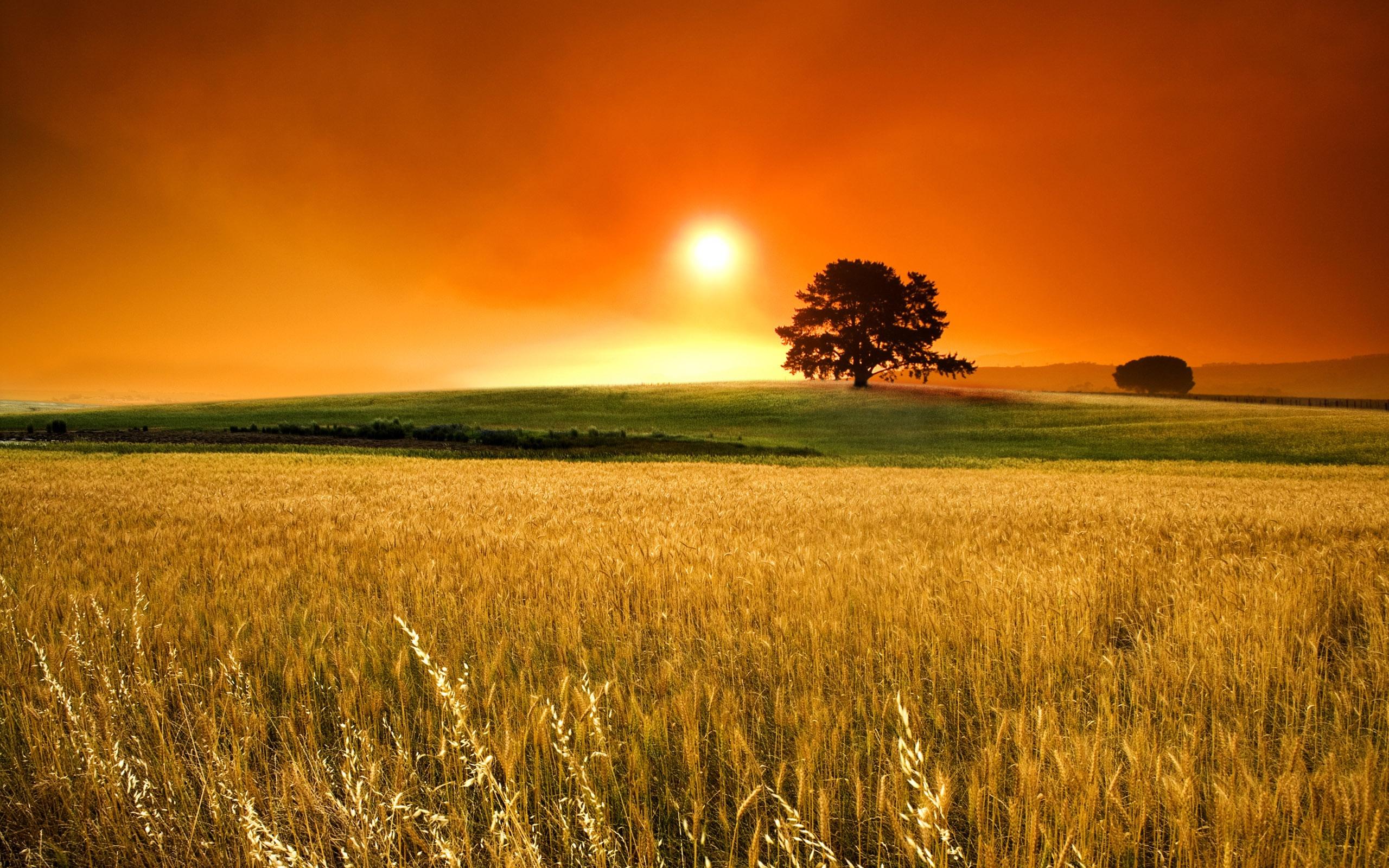 Новым годом, фото день солнца