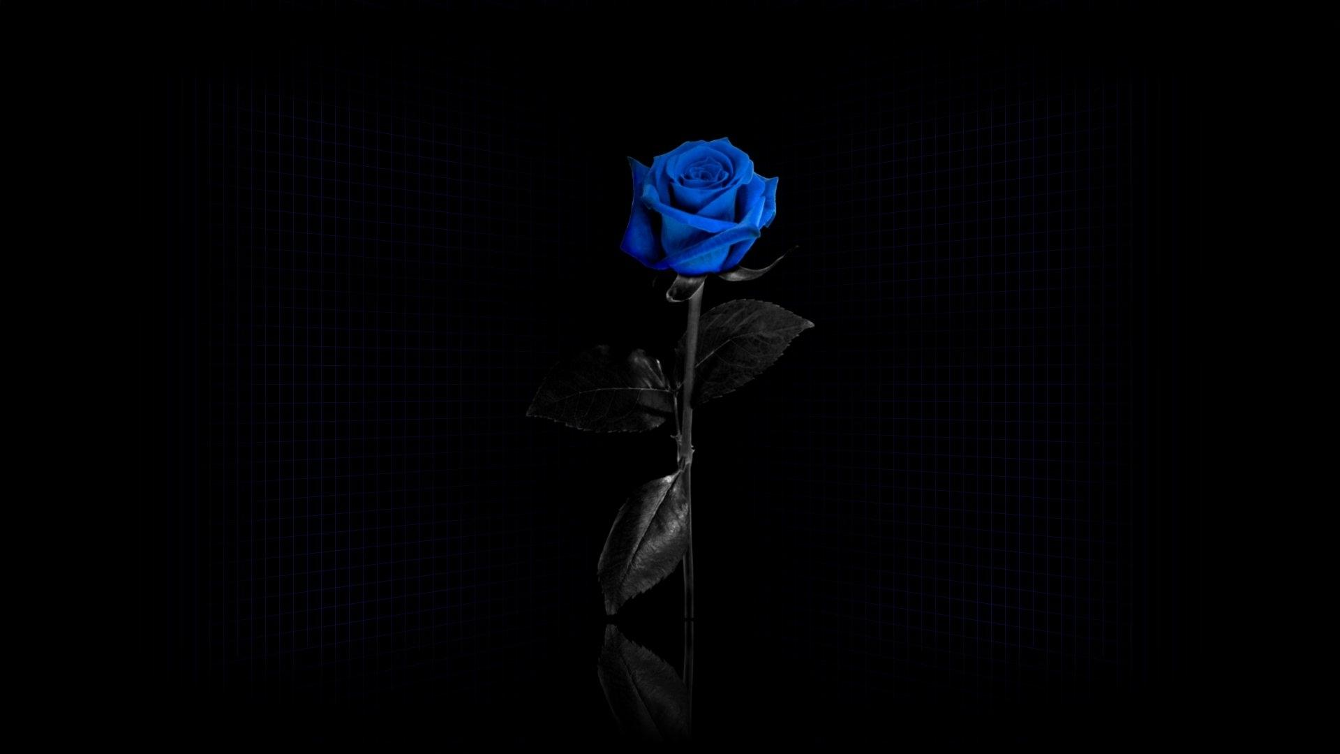 Добрым утром, картинки черная роза на рабочий стол