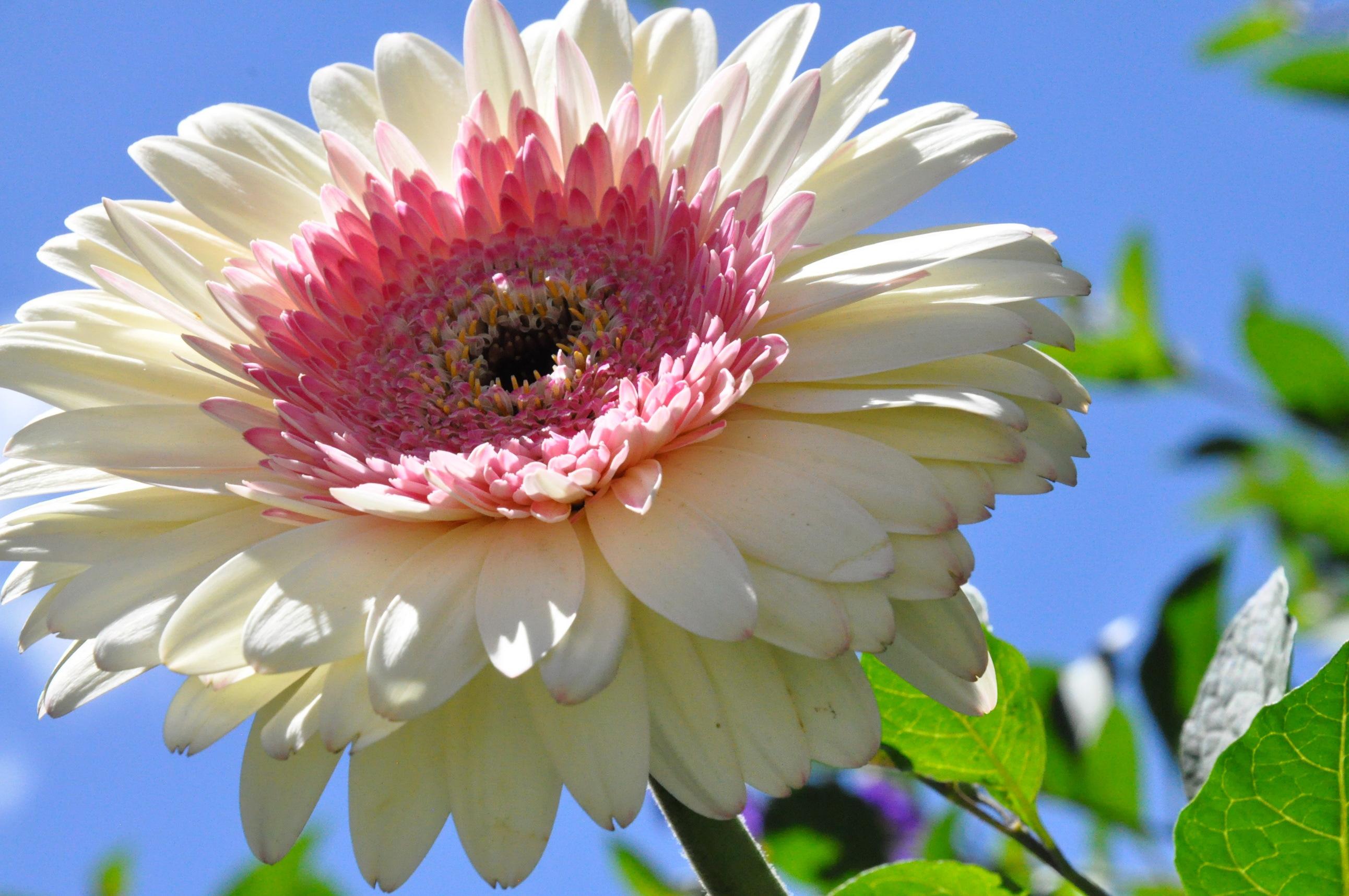 Фото одиночных цветов в хорошем качестве