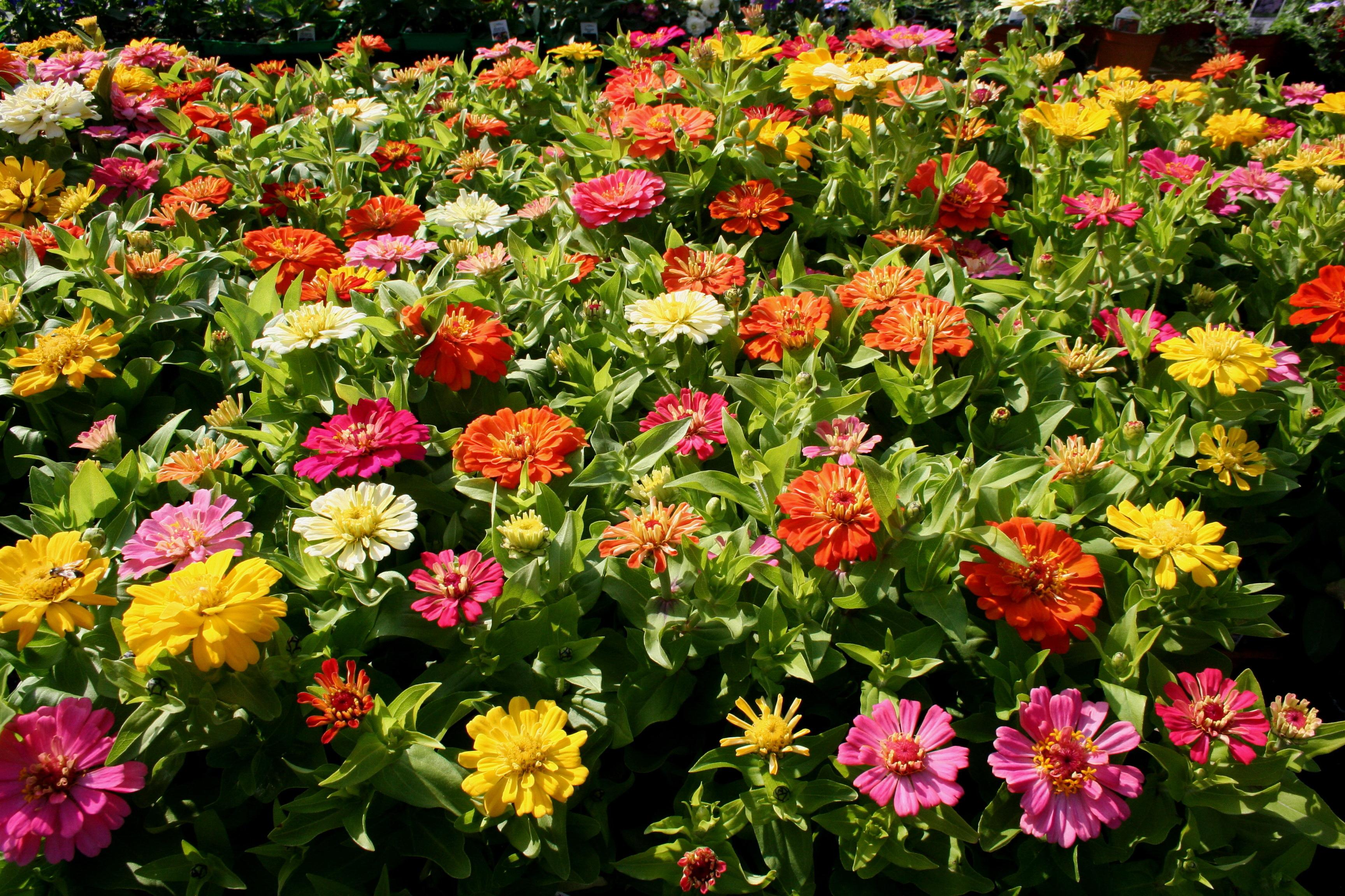 Открытки садовых цветов