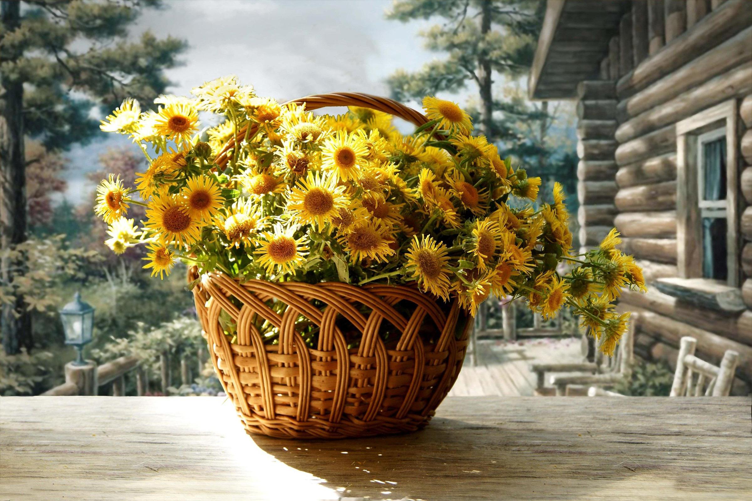 http://www.zastavki.com/pictures/originals/2014/Nature___Flowers_Beautiful_flowers_in_a_basket_Chrysanthemum_067234_.jpg