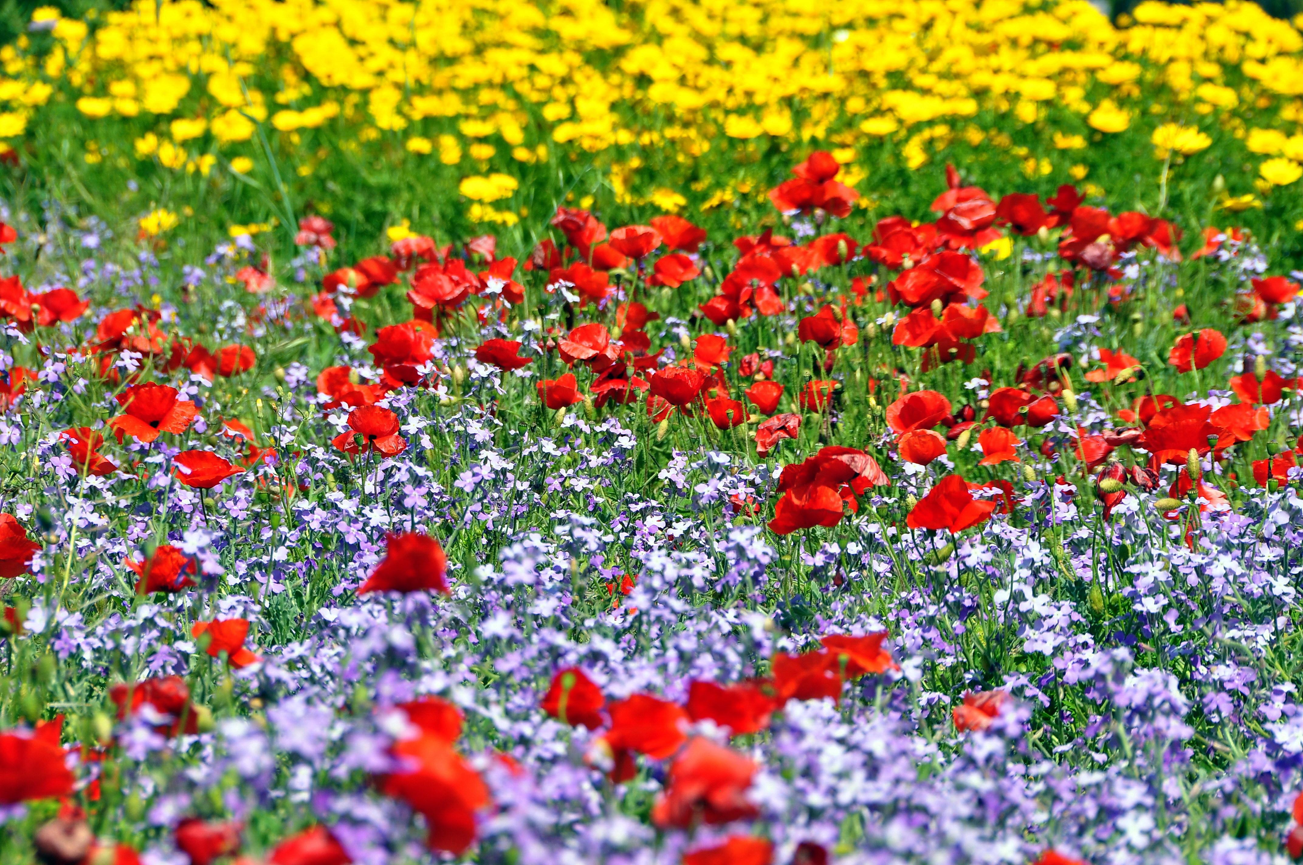 прочитайте фото картинки поляна цветов ней можно ходить