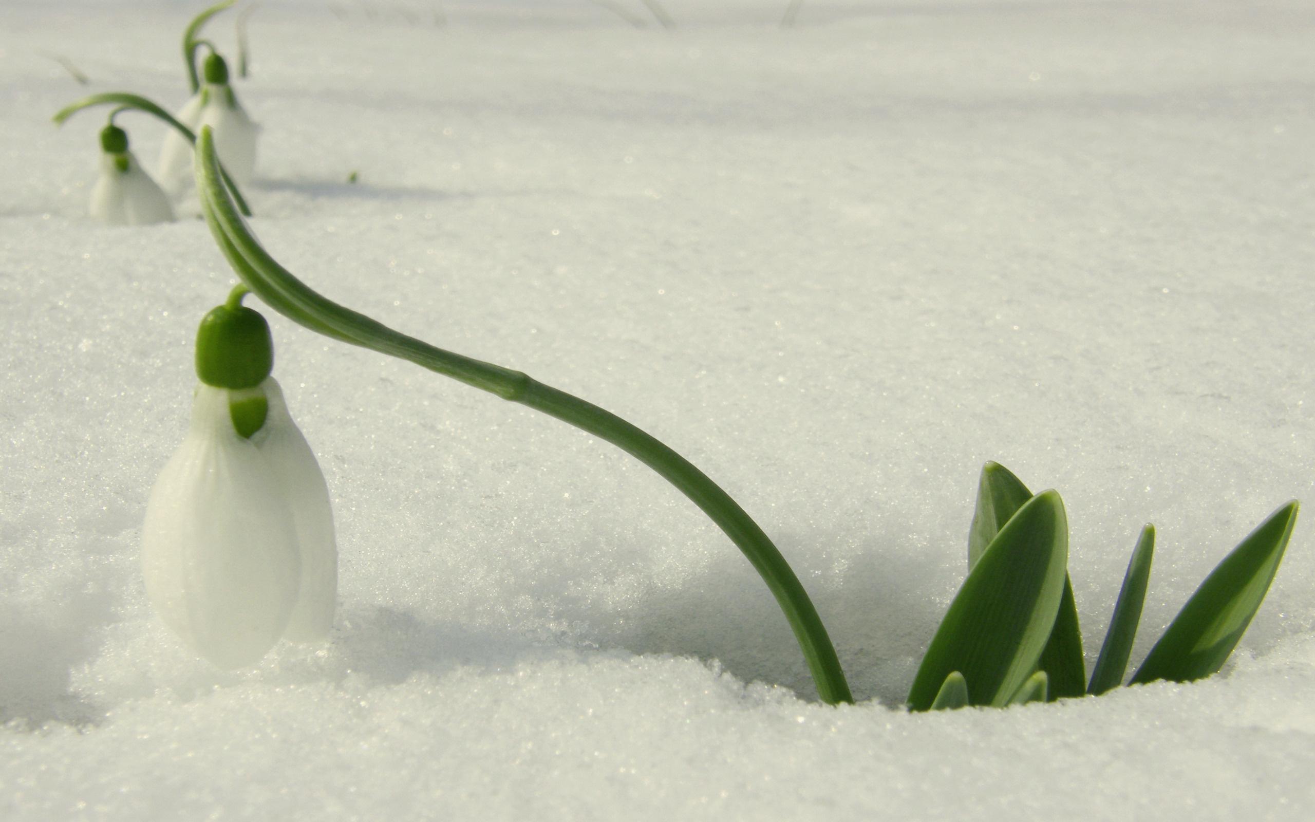 Снегурочка доброе утро картинки такого приглашения