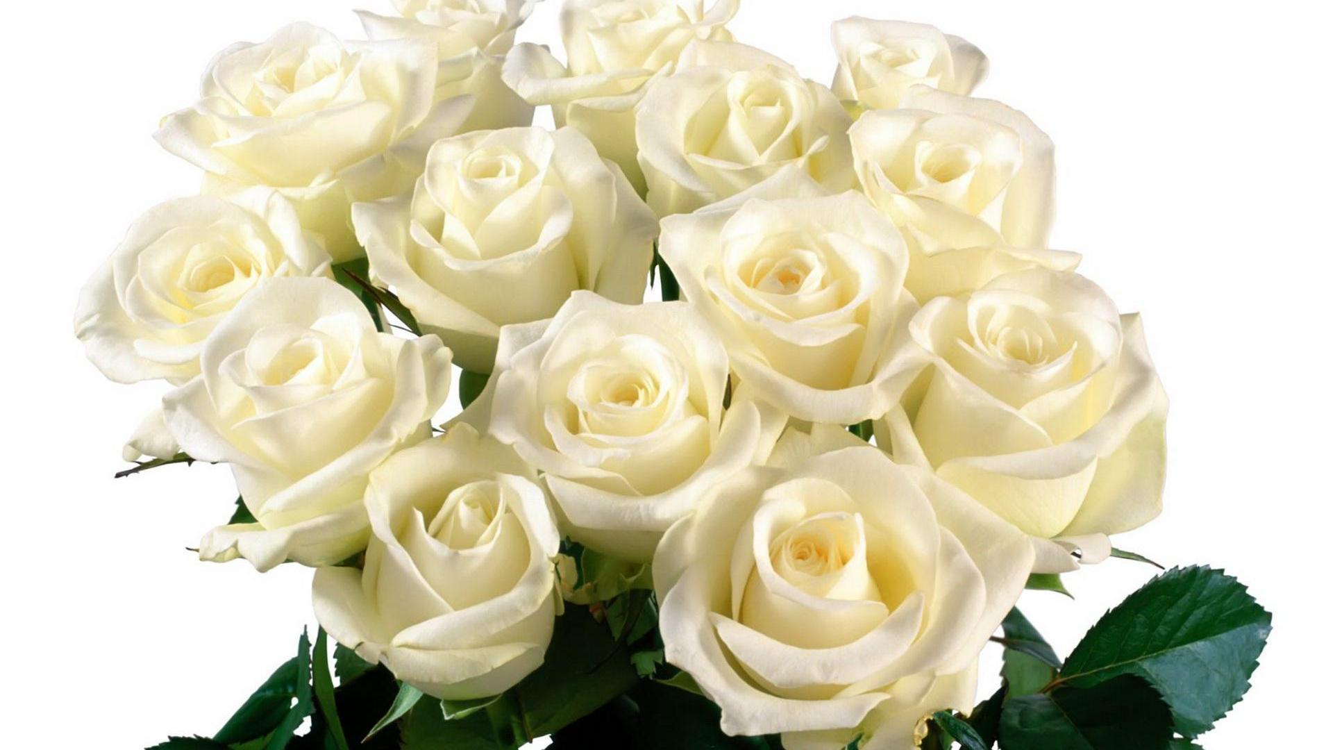 Белые розы на день рождения открытка 7418 13