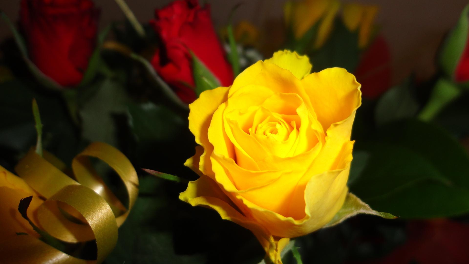 означает желтые розы фото на рабочий стол работы