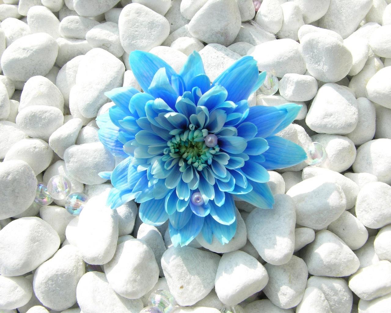 Камни белого цвета фото