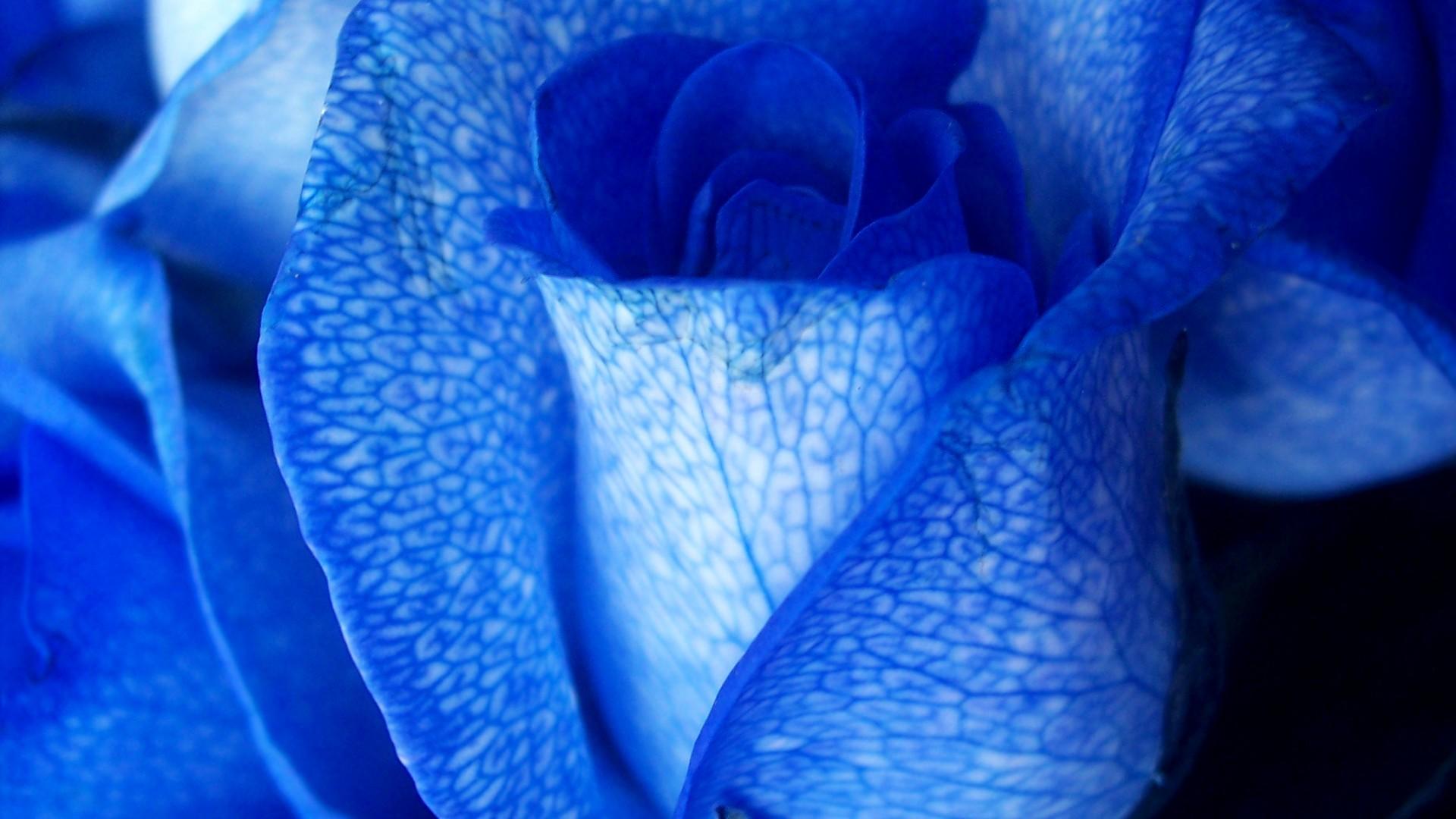 Красивые картинки на рабочий стол синего цвета