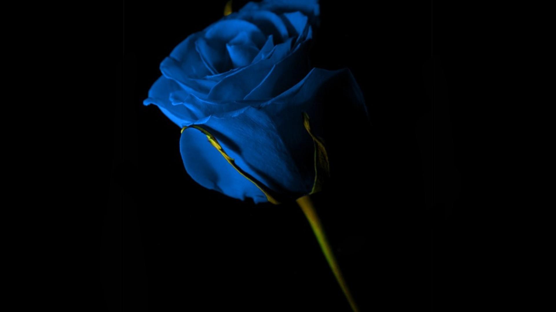 картинки цветов черные и синие она форм