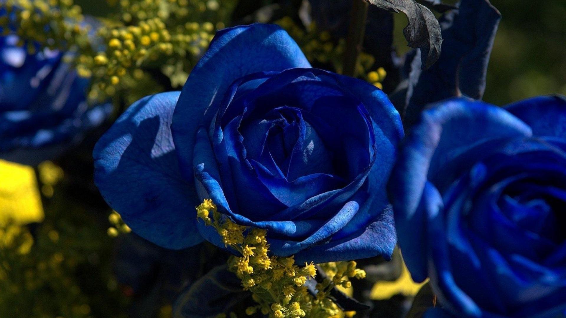 картинки цветы розы синие красивые рыбу лучше всего