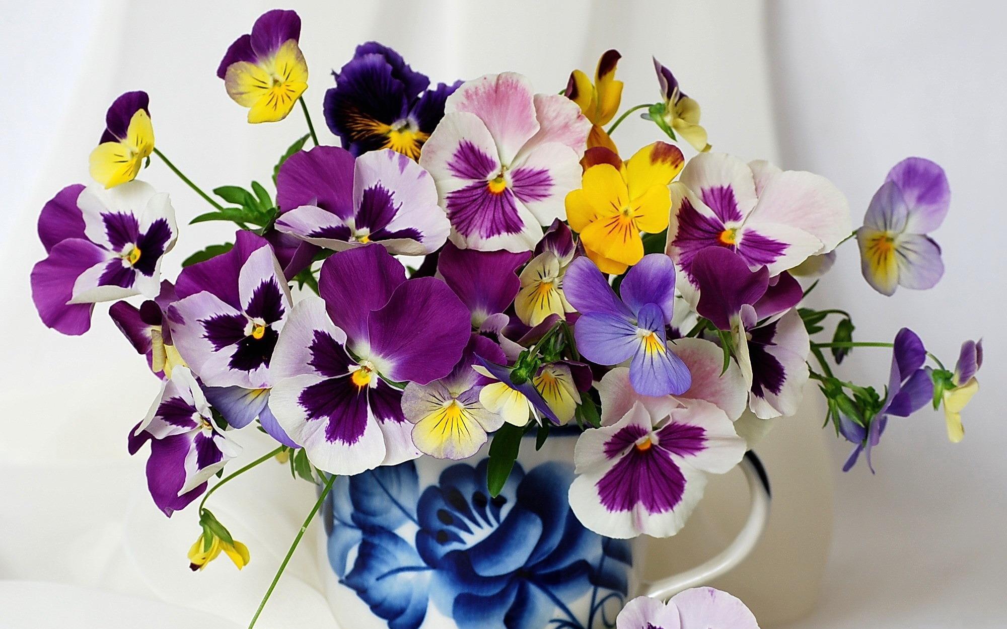 Открытки цветы анютина глазки, открытка летием