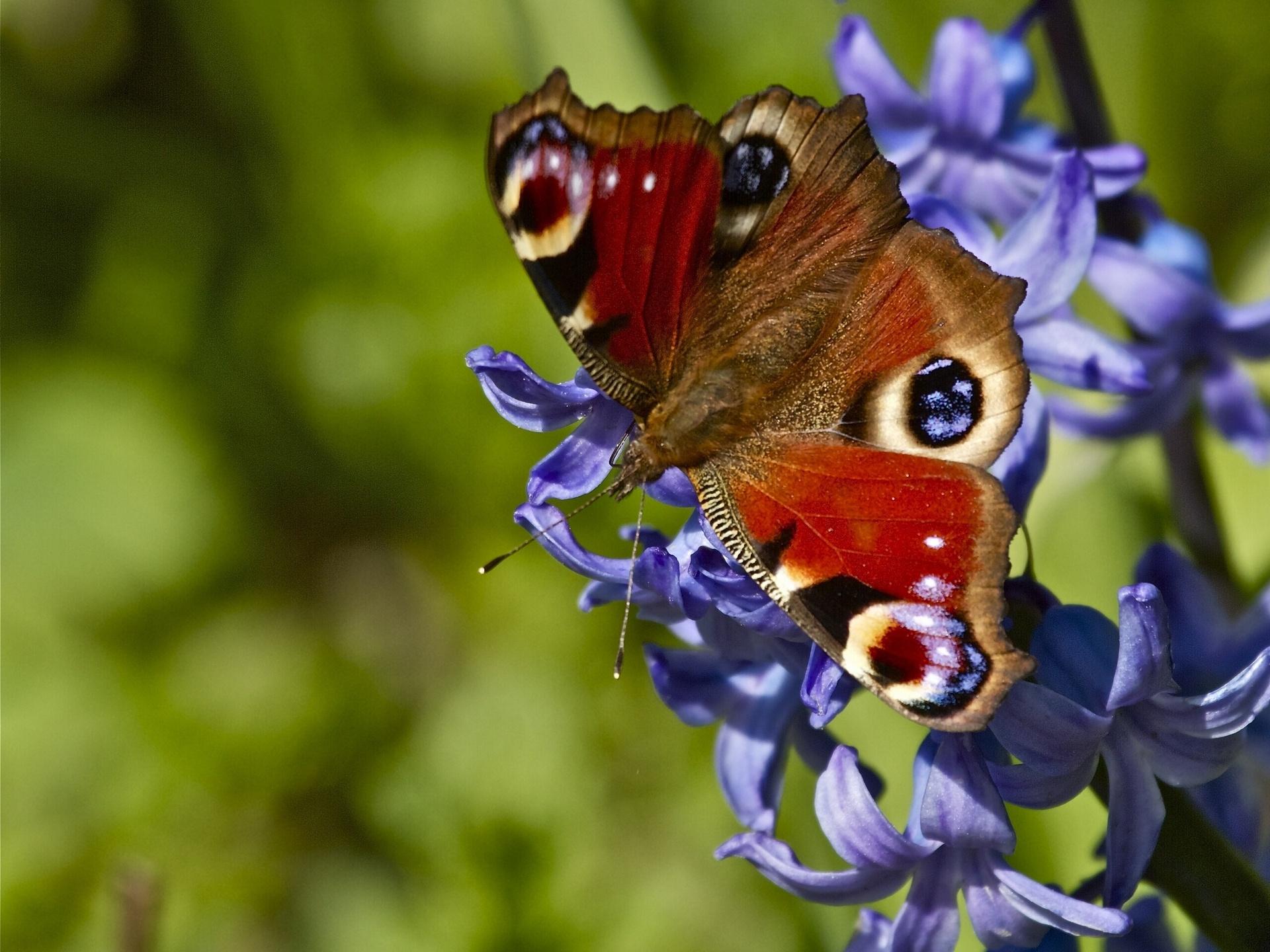 Картинка бабочек на цветах