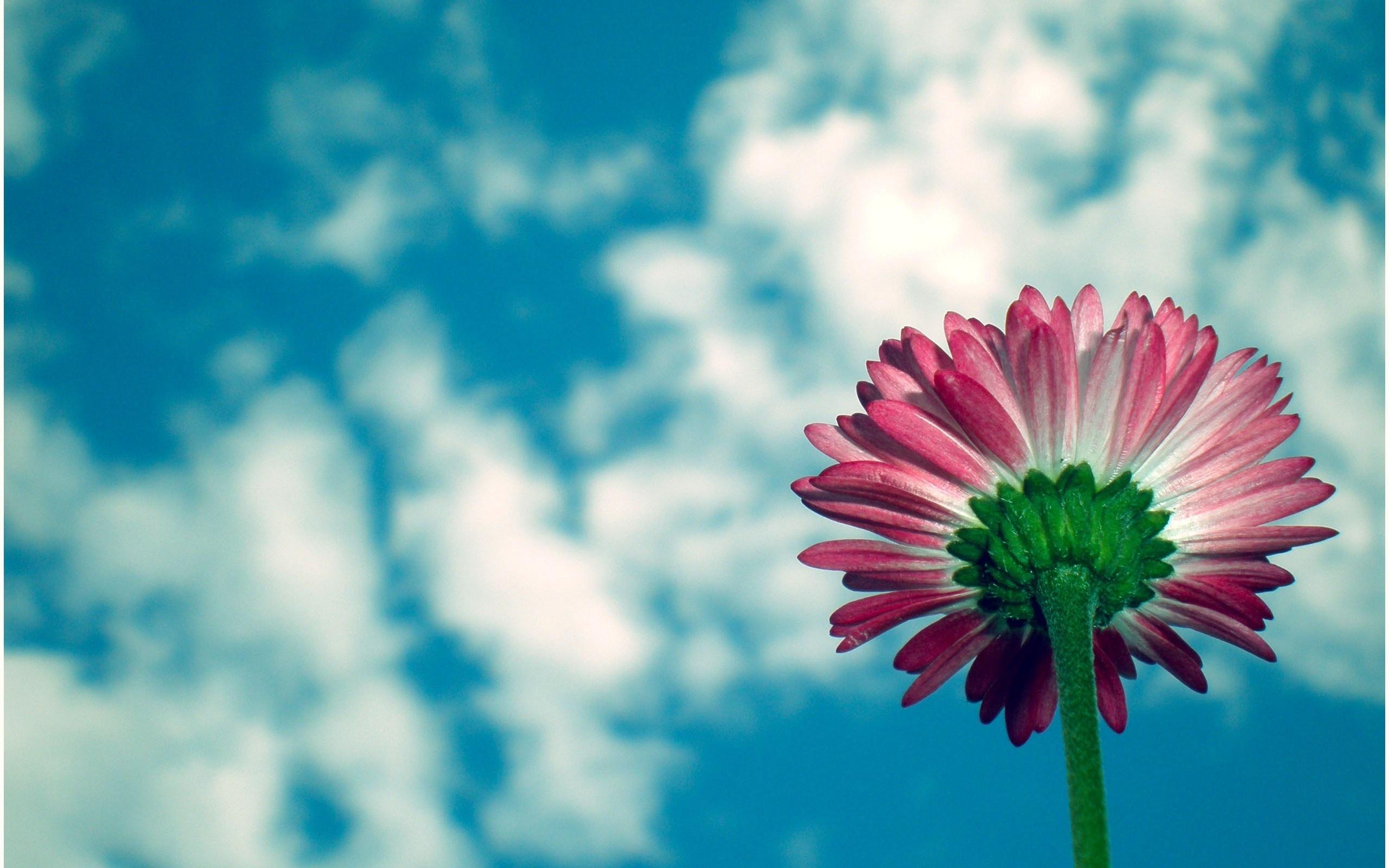 красивые картинки цветов на фоне неба