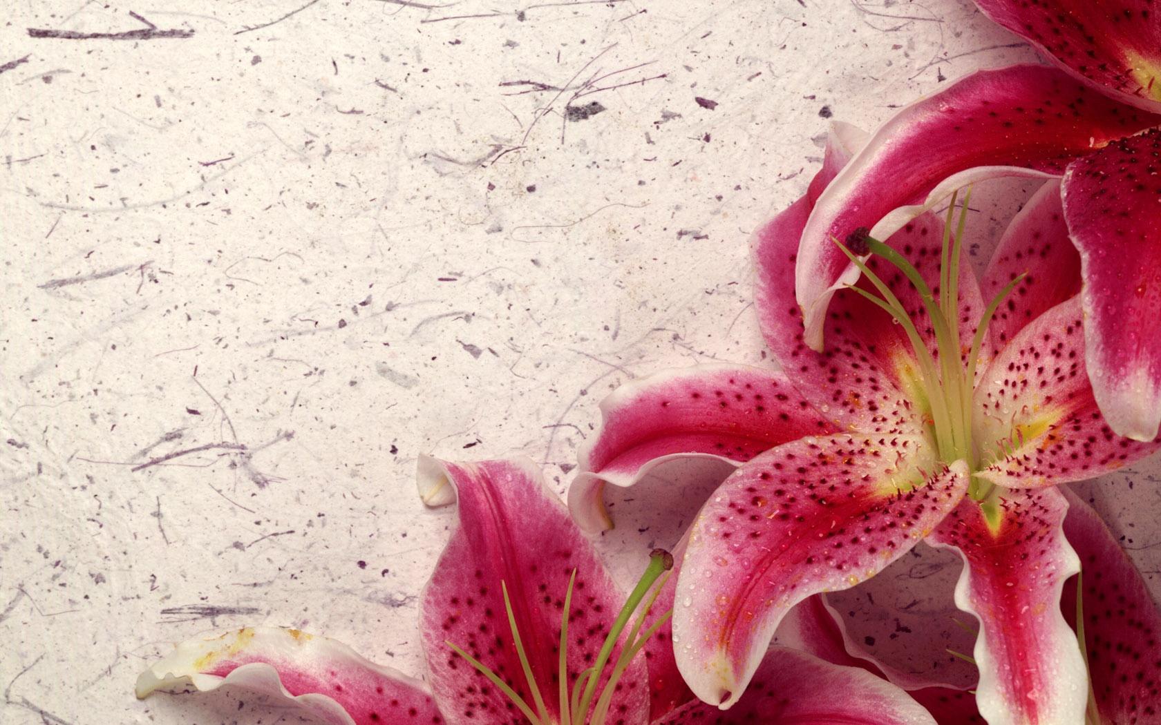 Картинки с днем учителя с цветами лилии