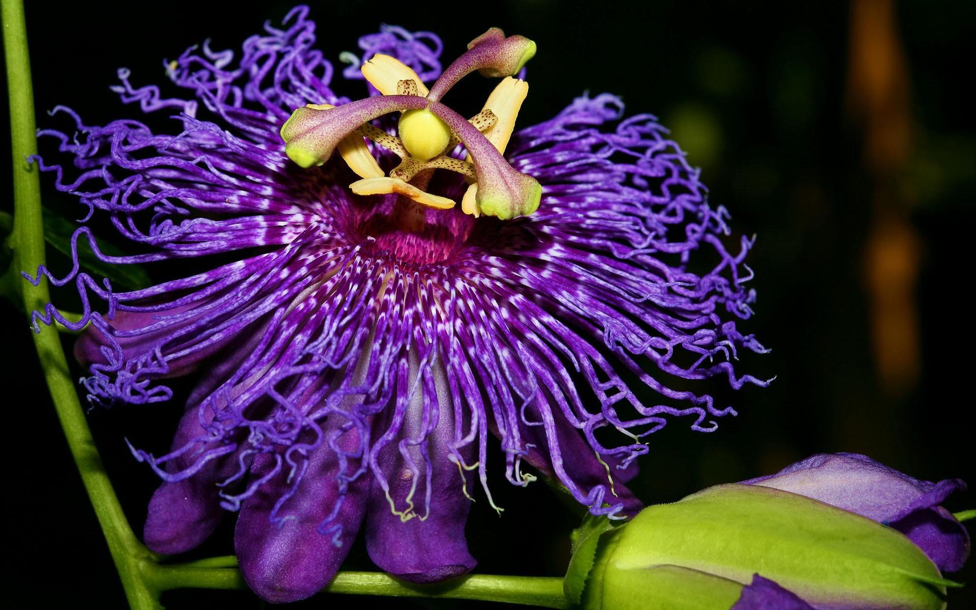Картинки с названиями экзотических цветов