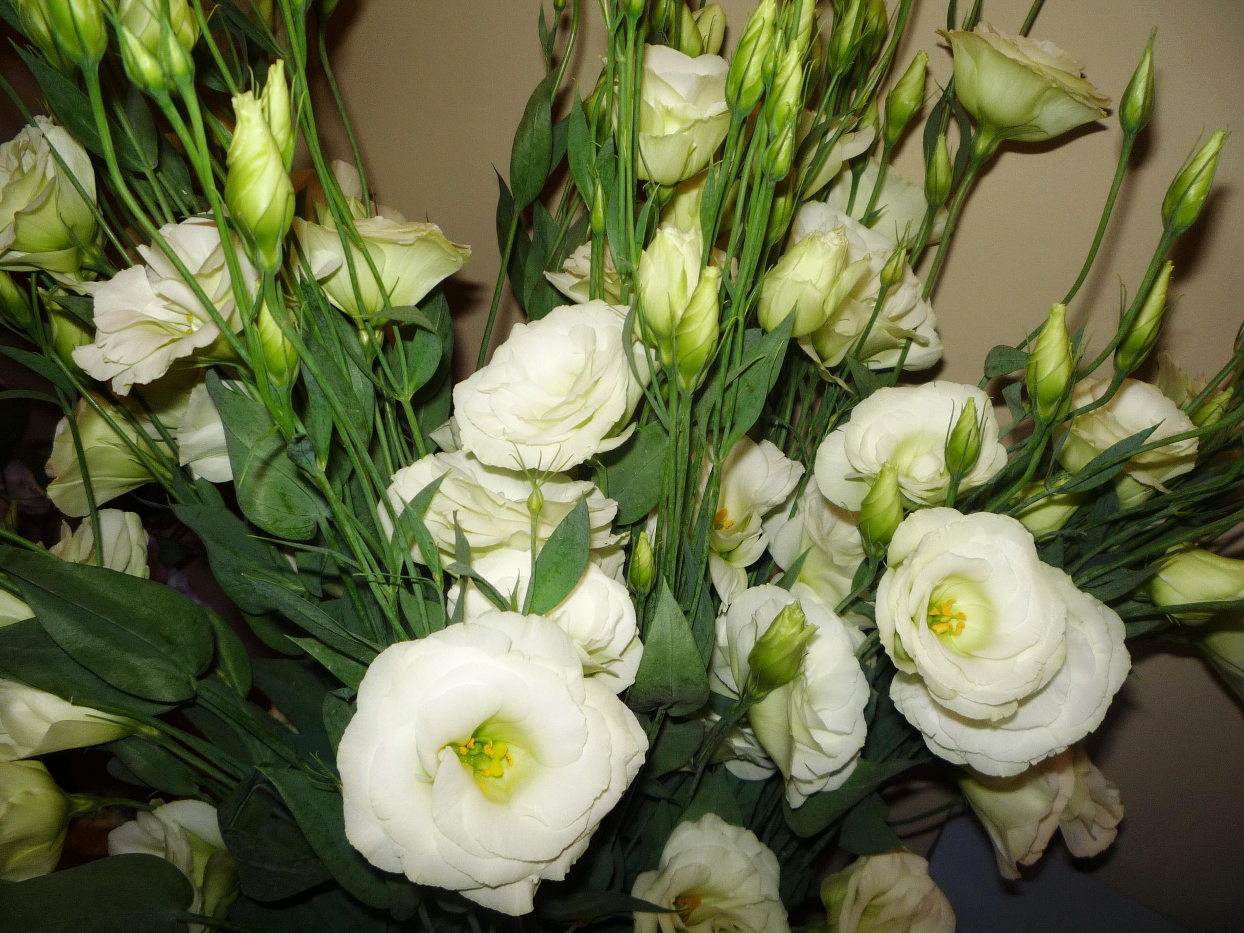 Зара каталог, цветы похожие на розы кустовые