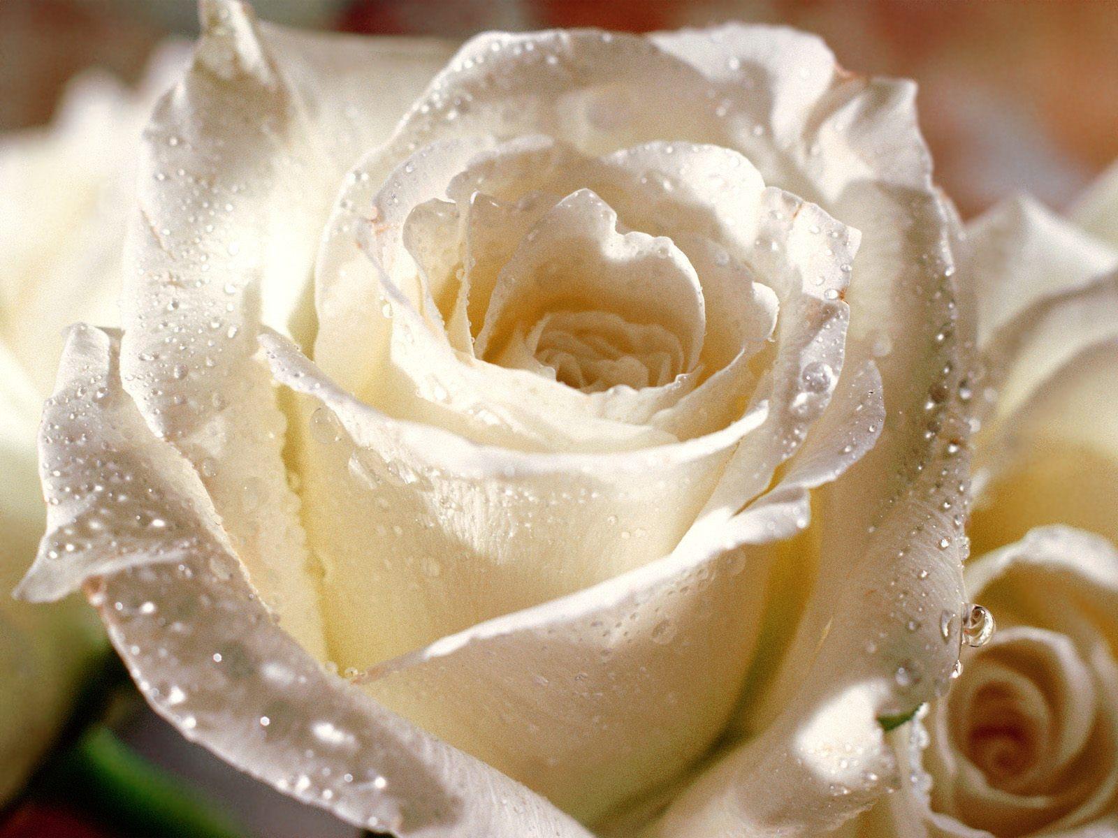 самые красивые картинки на всем белом свете называют
